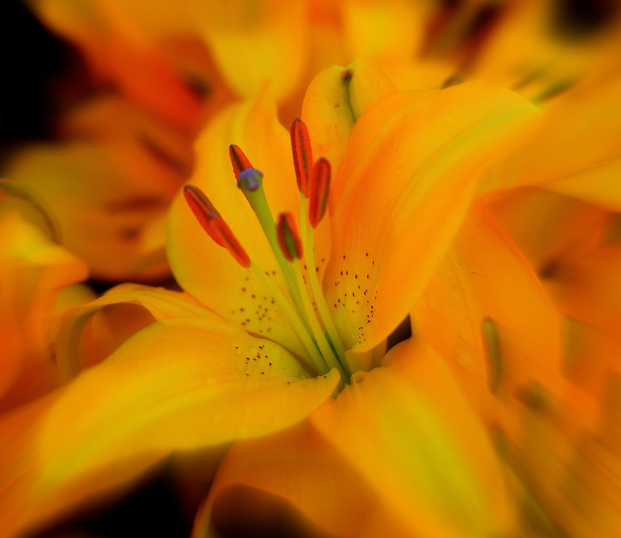 Floral 441 by mpross1
