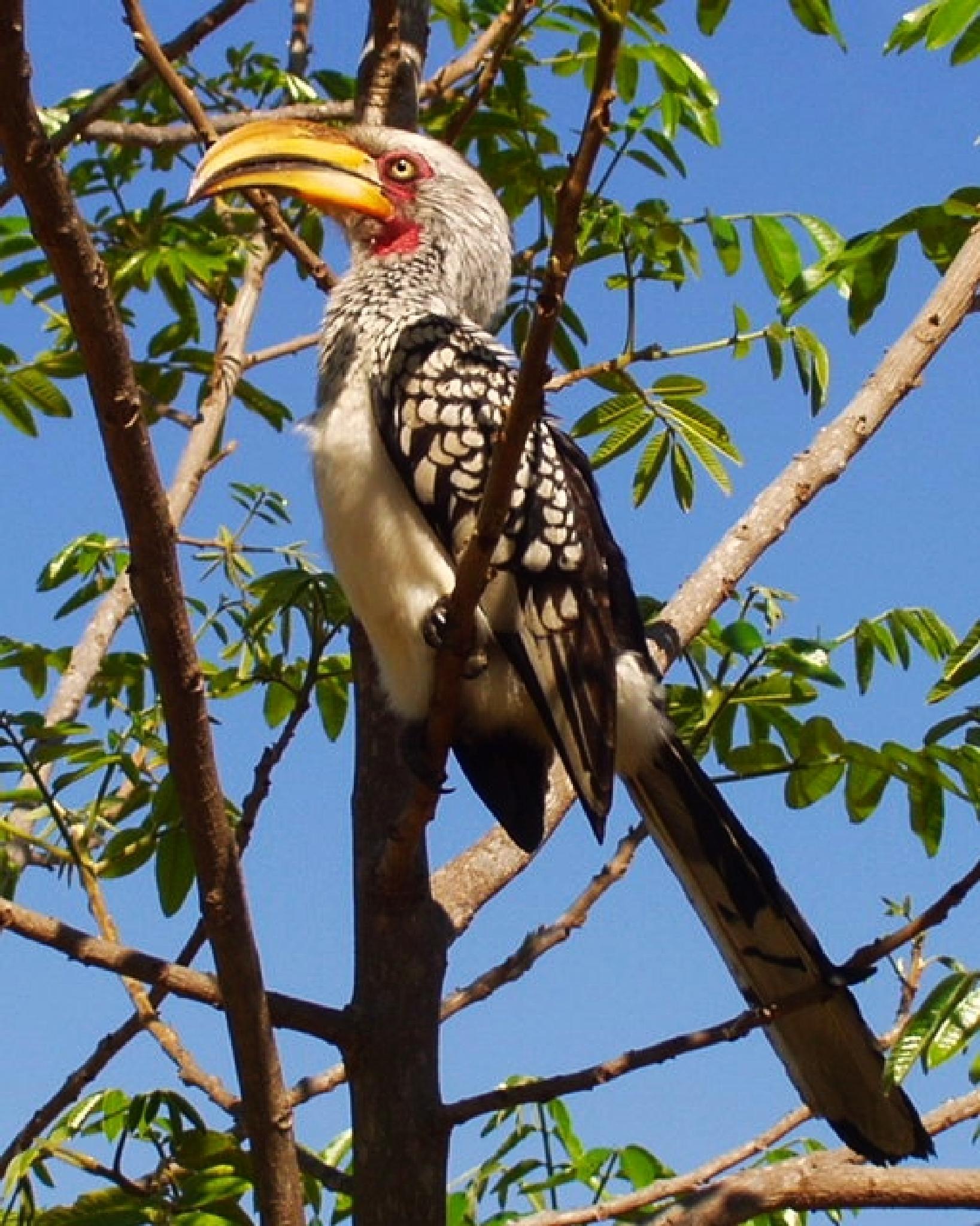 Bird - South Africa by fr-azza-photos