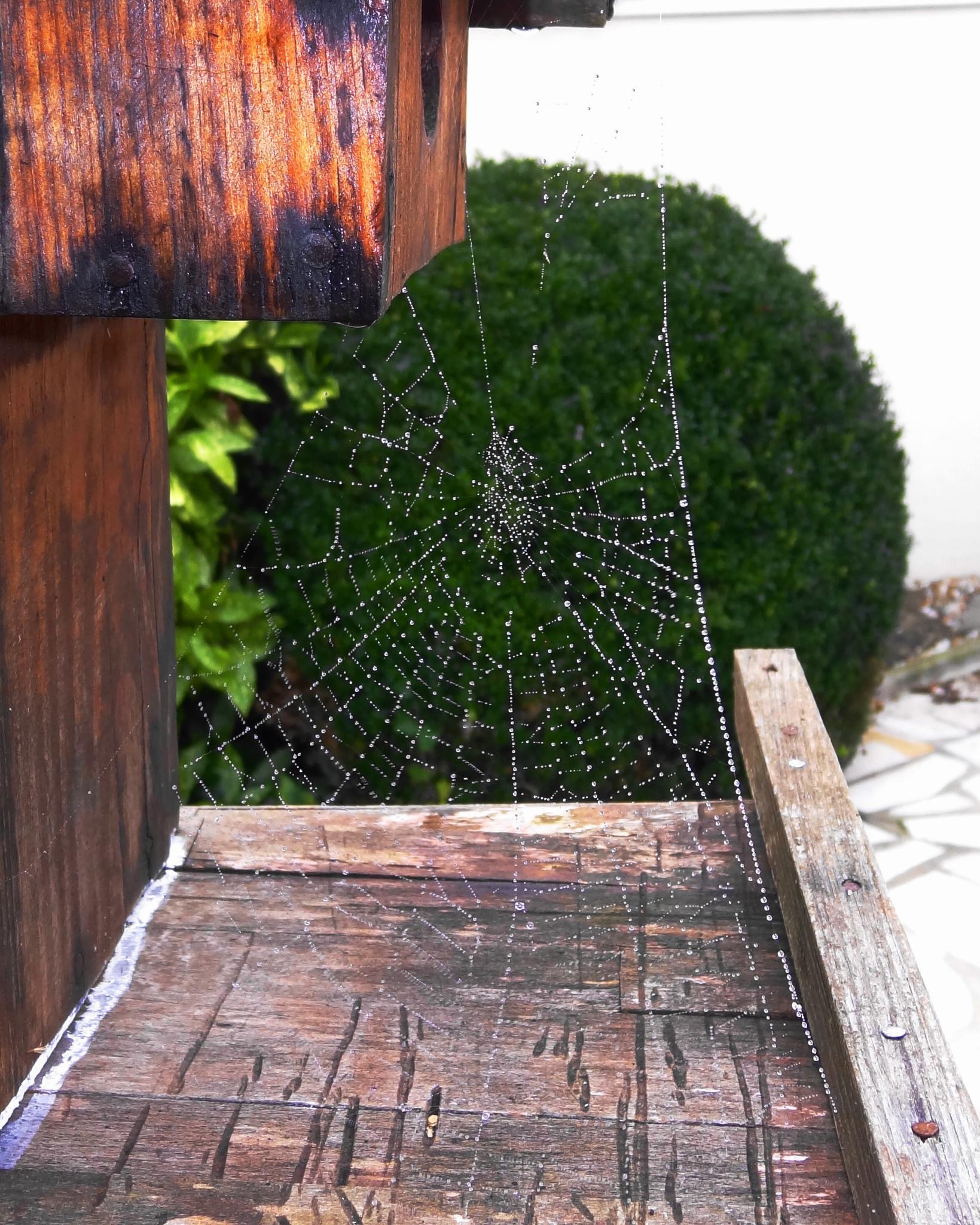 Cobweb by fr-azza-photos