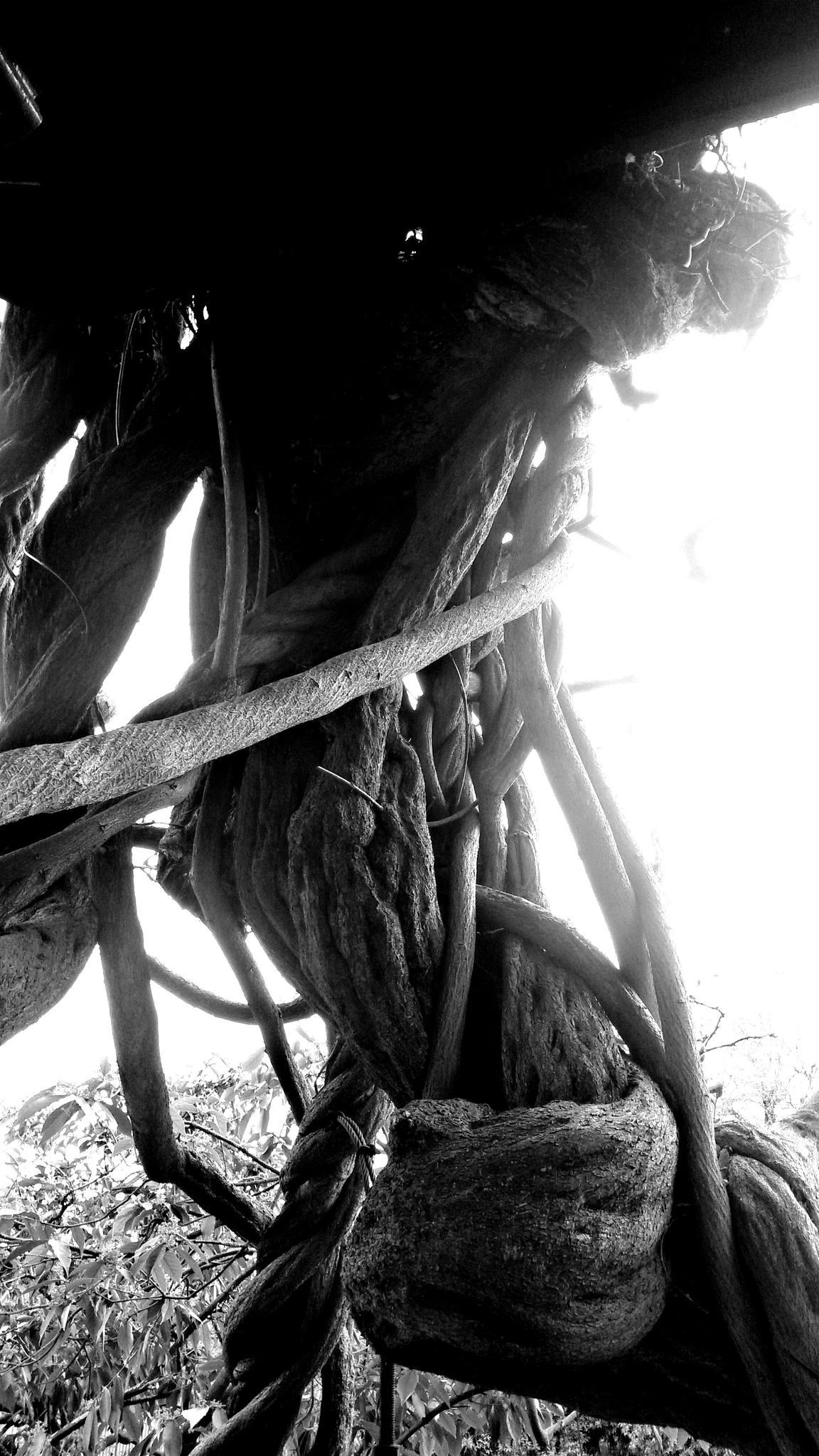 Trees & Roots by fr-azza-photos