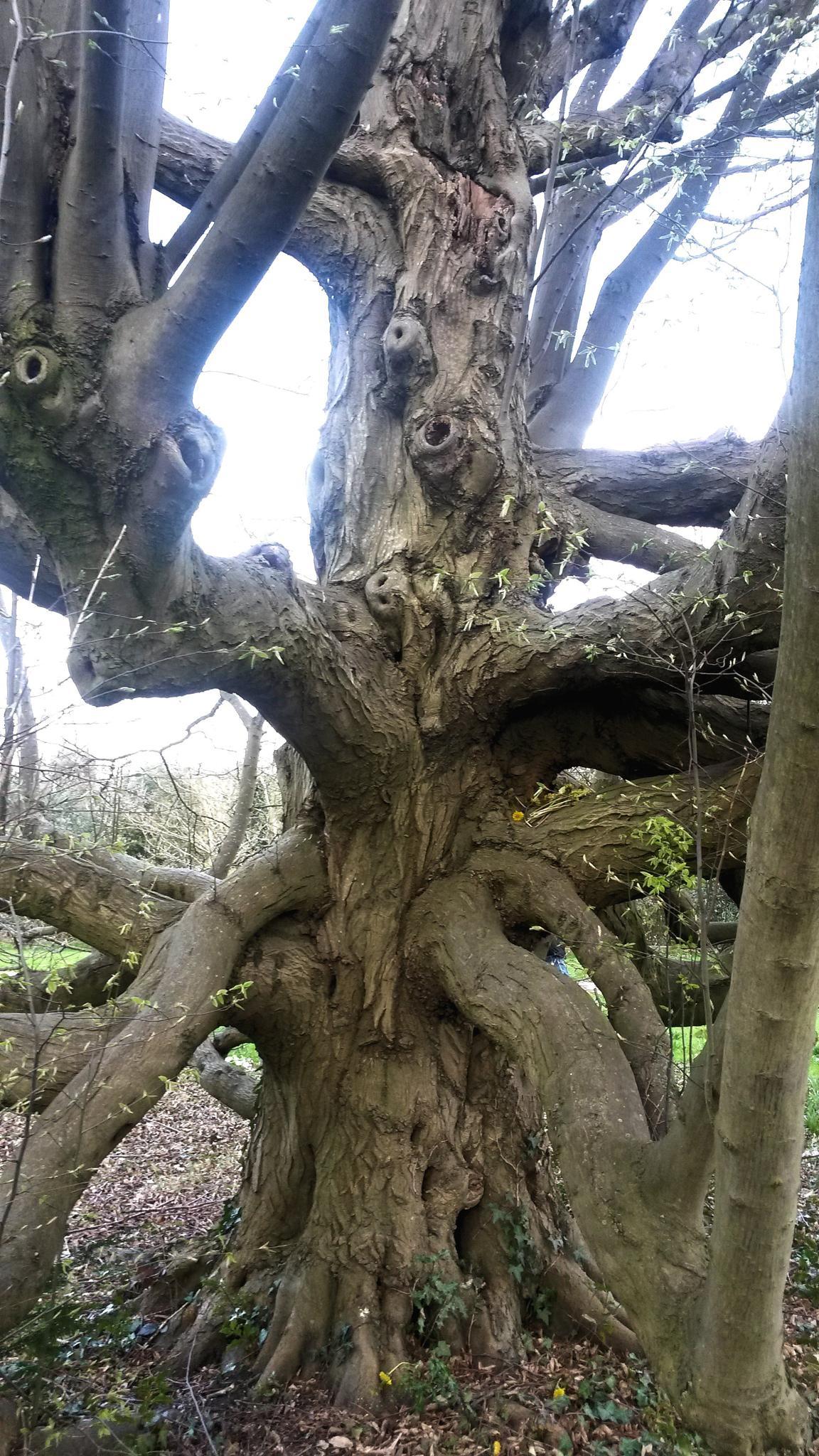 W tree by fr-azza-photos
