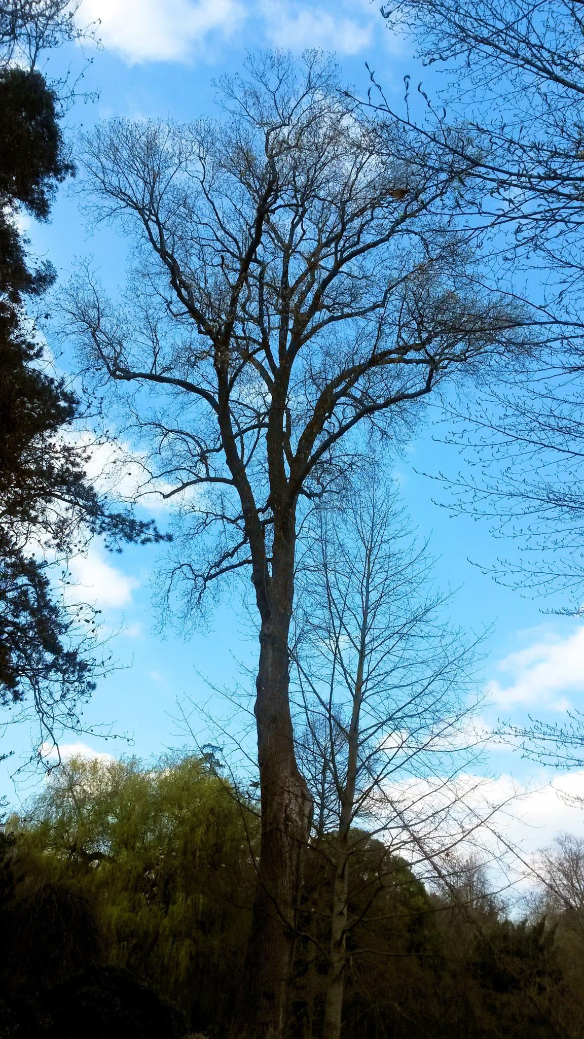 Tree  by fr-azza-photos