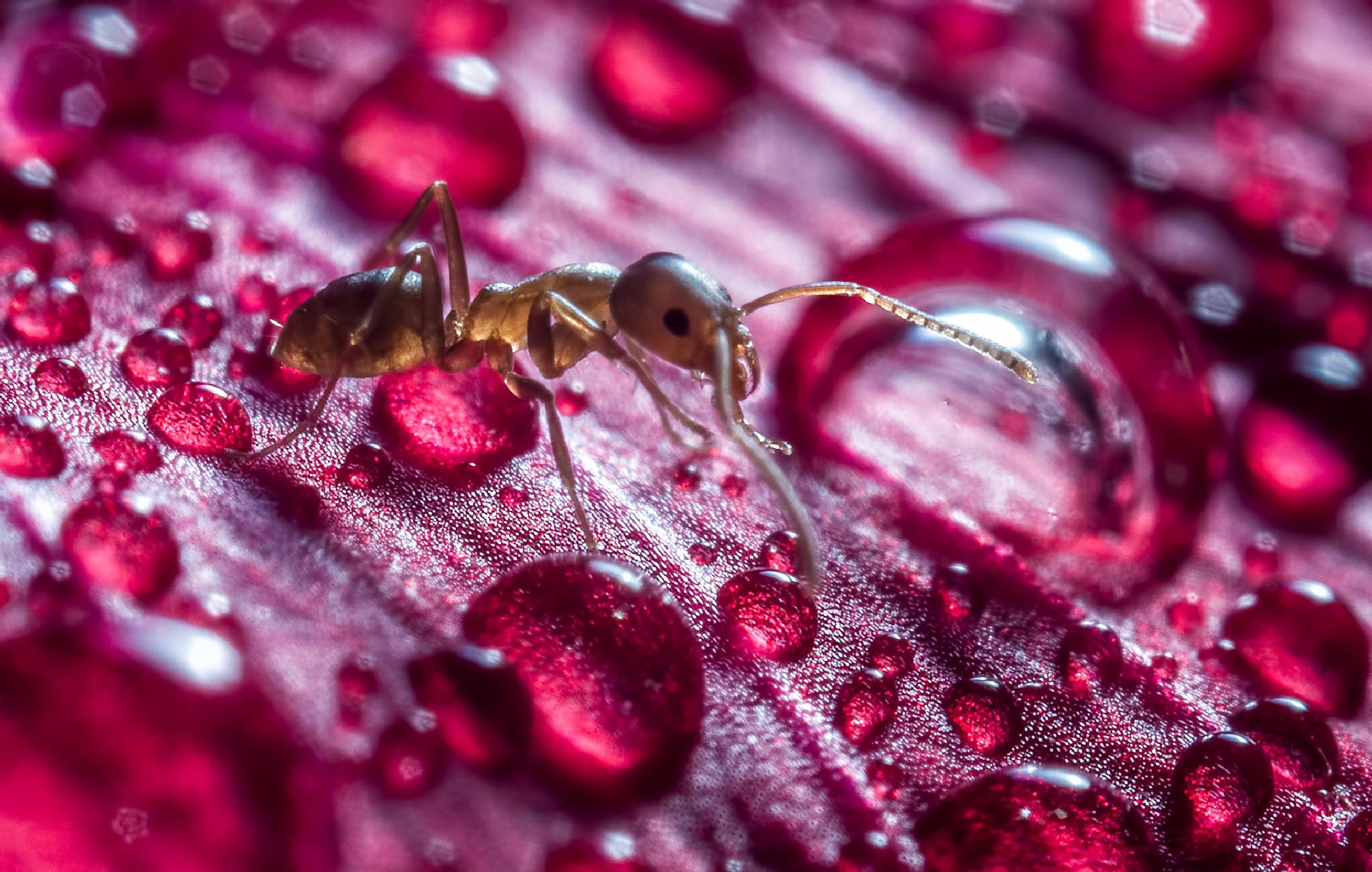 Ants and Drops by Jorge Figueroa Arce