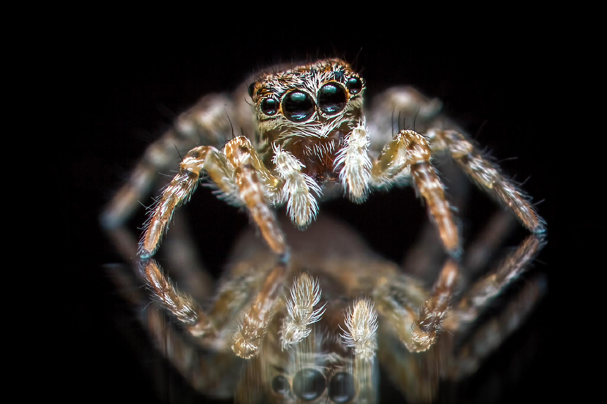 Photo in Macro #spider #eyes #reflection