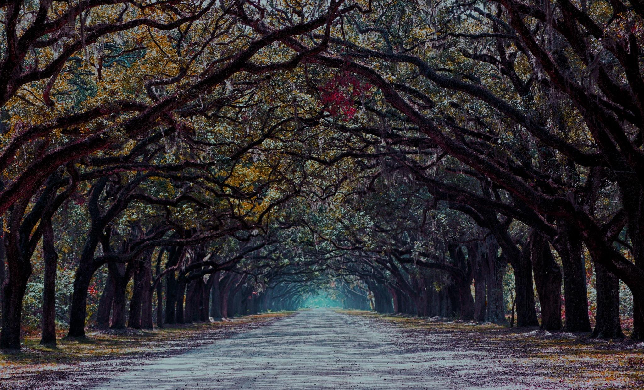 Savannah by Antoni Marek Polczyk
