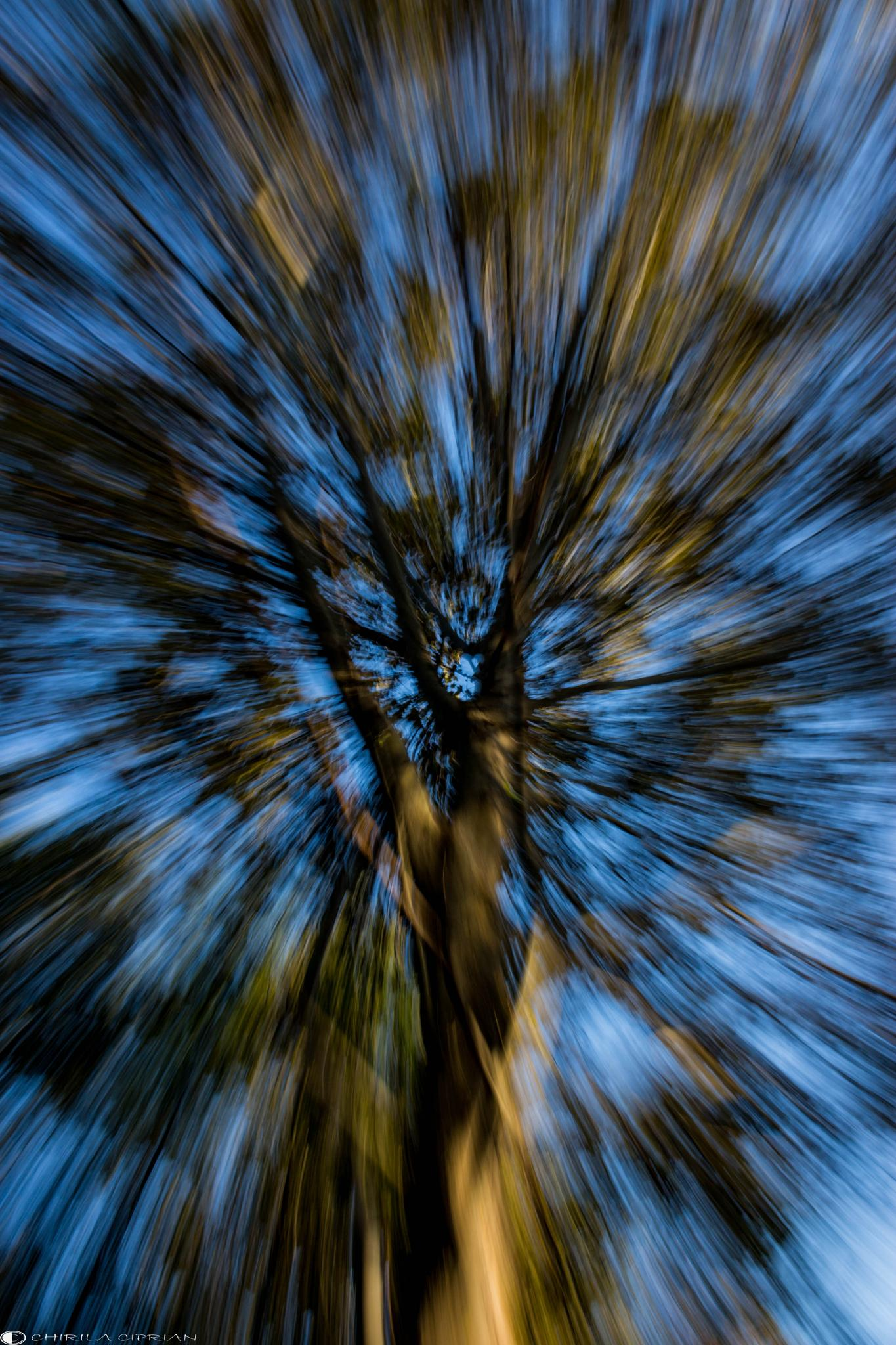 Photo in Abstract #tree #abstract