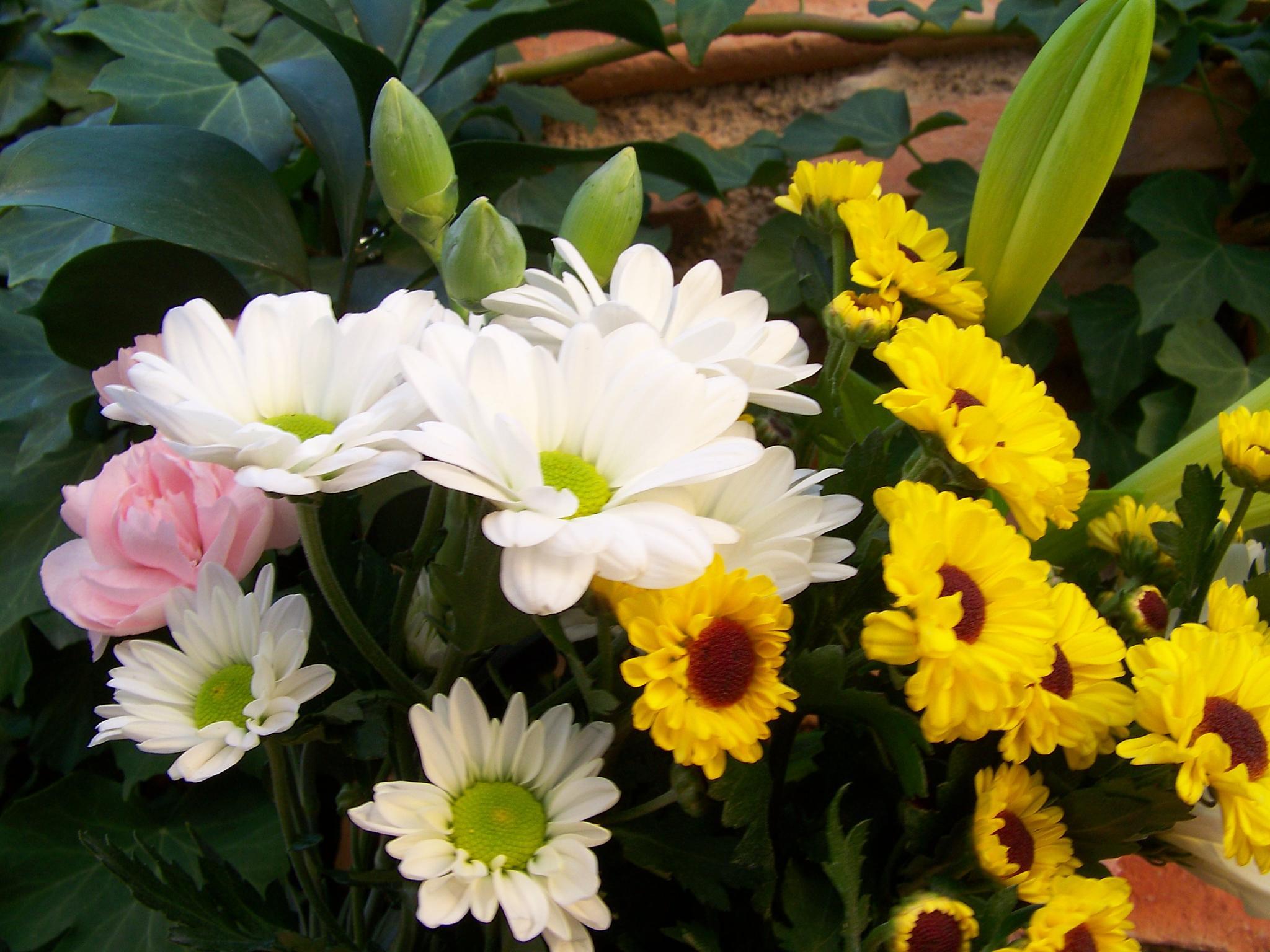 En el día de todos los Santos, apreciamos la belleza de unas flores distintas, a las de la primavera by maydo.lopez