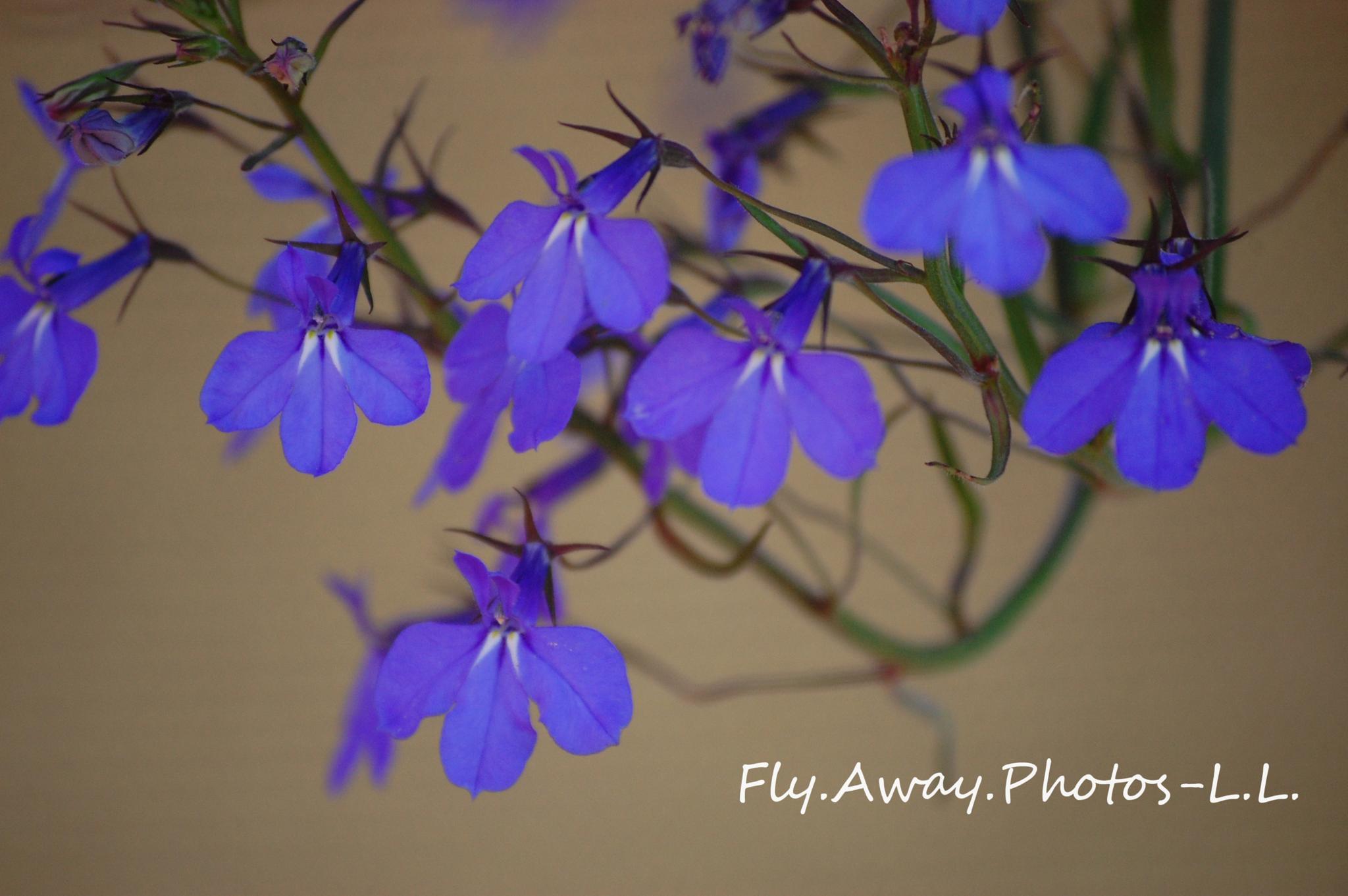Photo in Nature #flower #wild flowers #blue