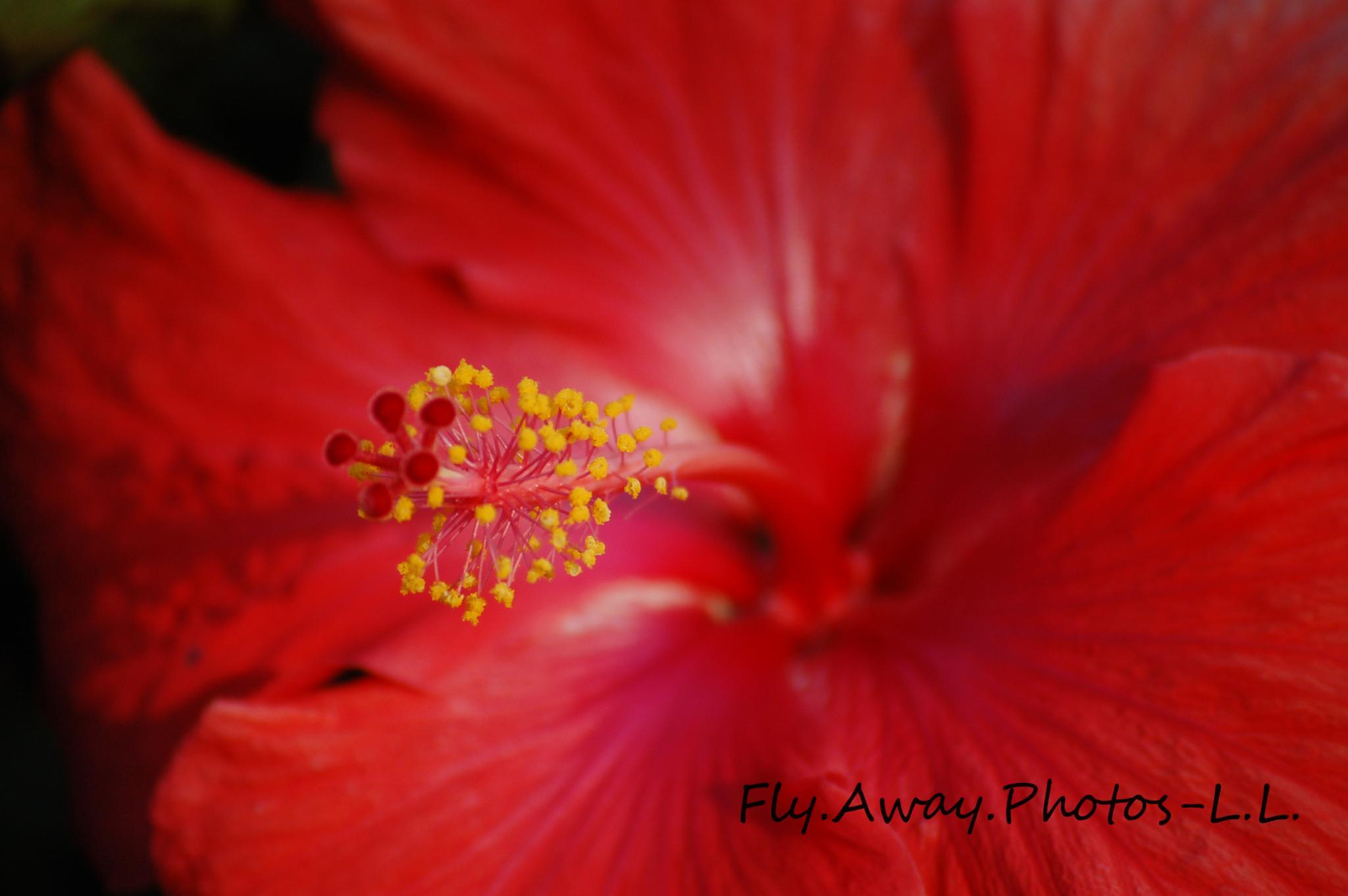 Photo in Nature #hibiscus #hawaiian #flower