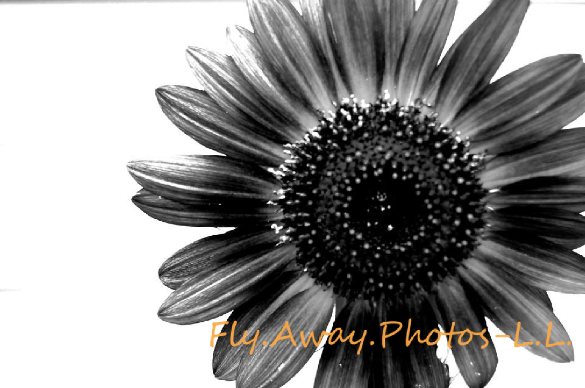 Photo in Black and White #sunflower #black and white #b&w #flower