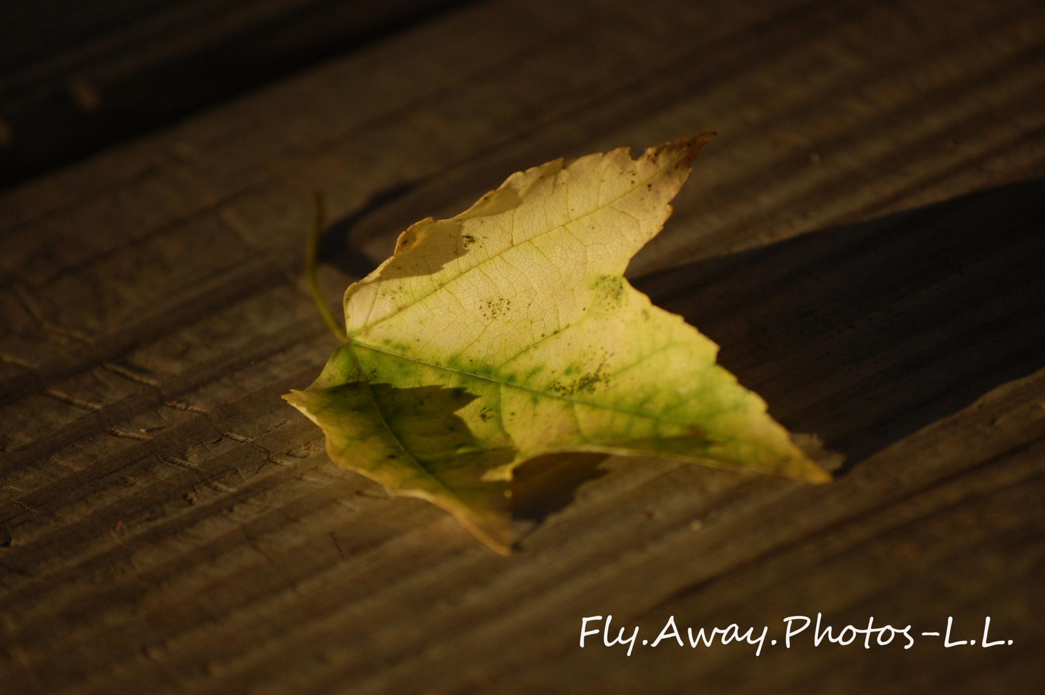 Lone Leaf by Leah Lisee Photography