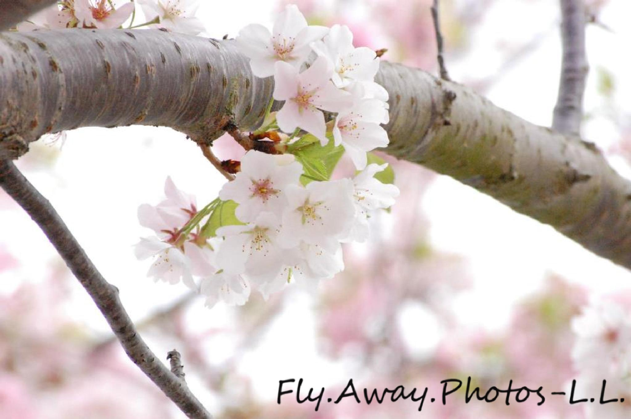 Photo in Nature #floral #soft #pinks #spring