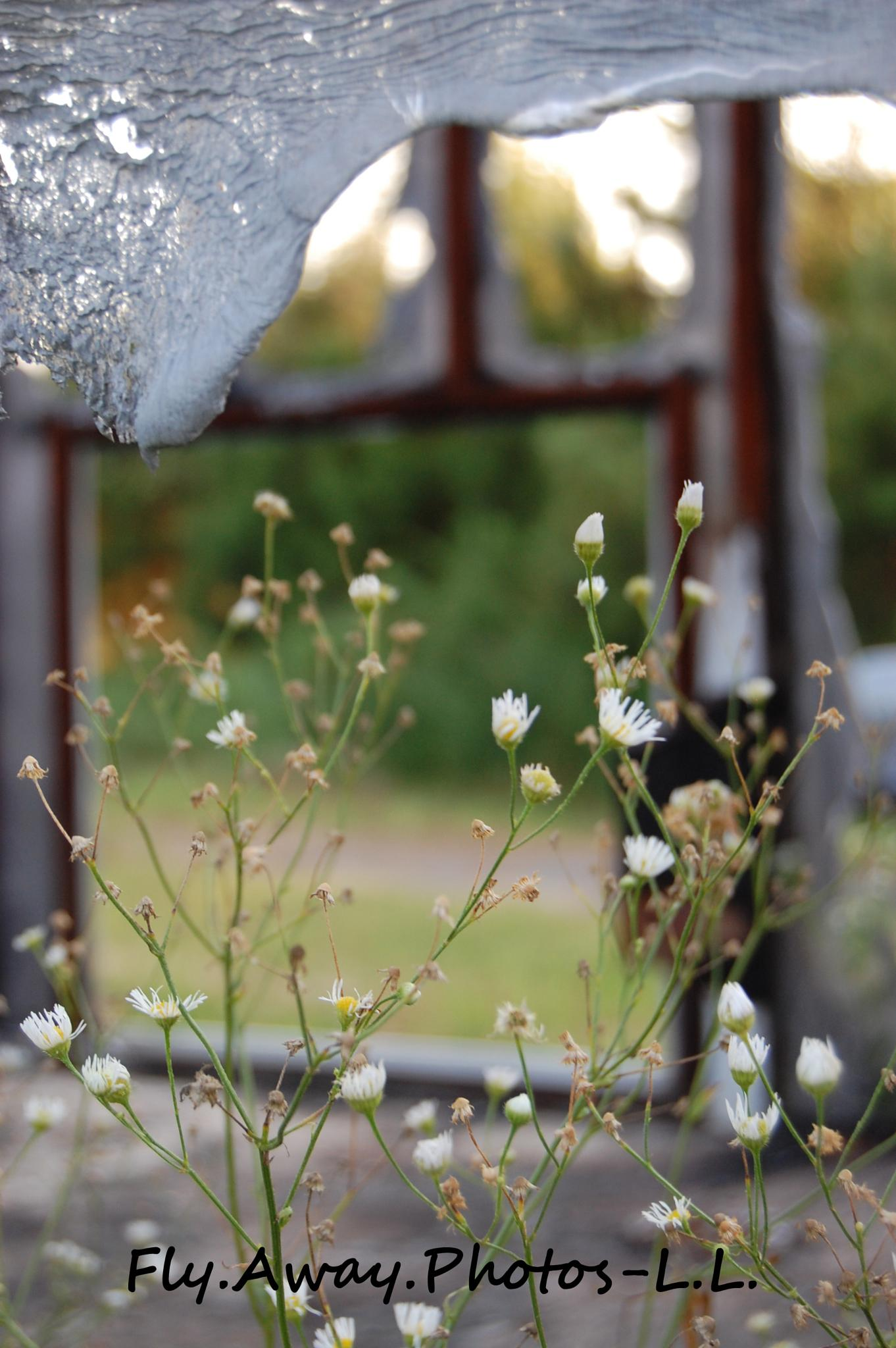 Photo in Still Life #contrast #wildflowers #abandoned