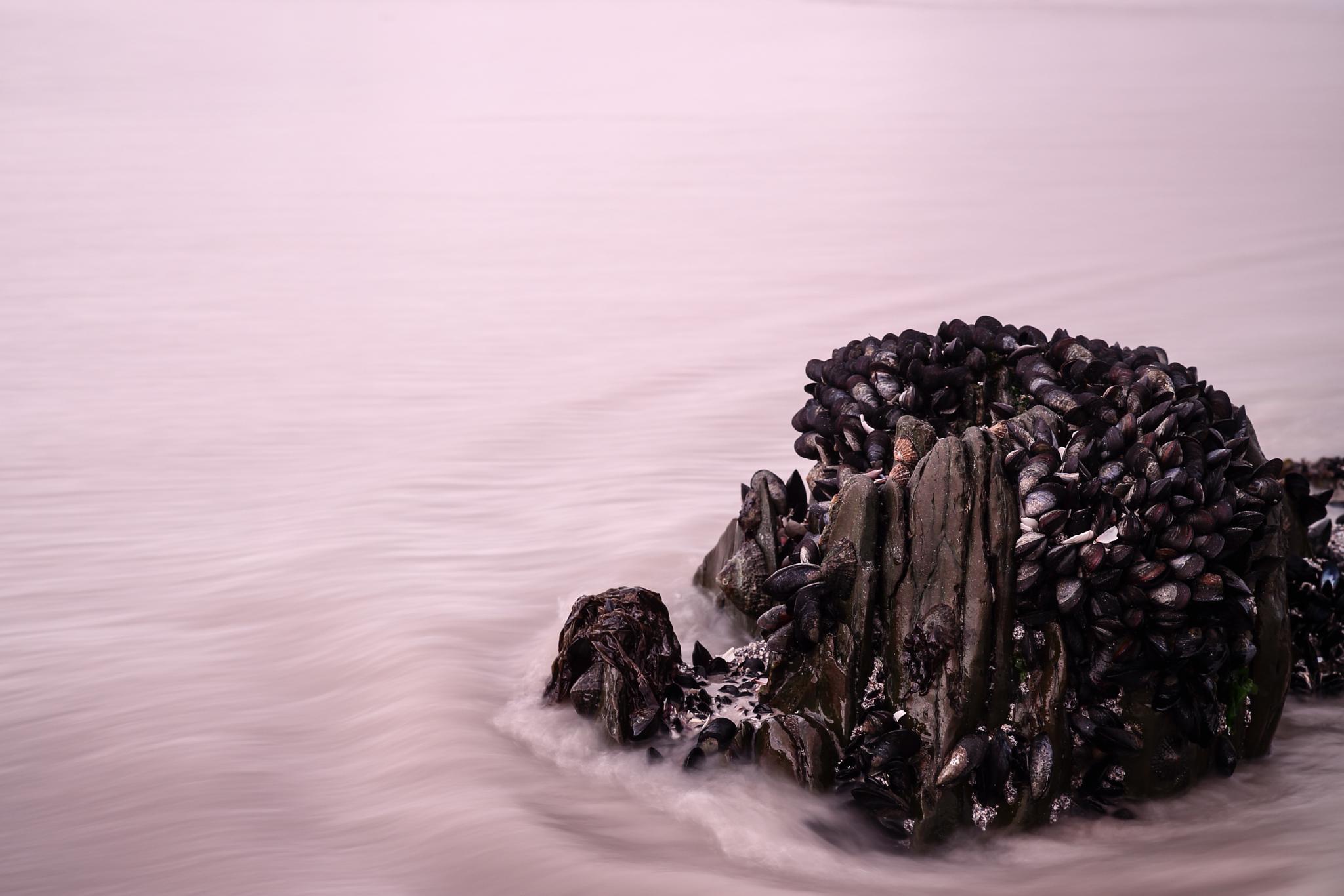 Black mussels  by Stephan Du Toit