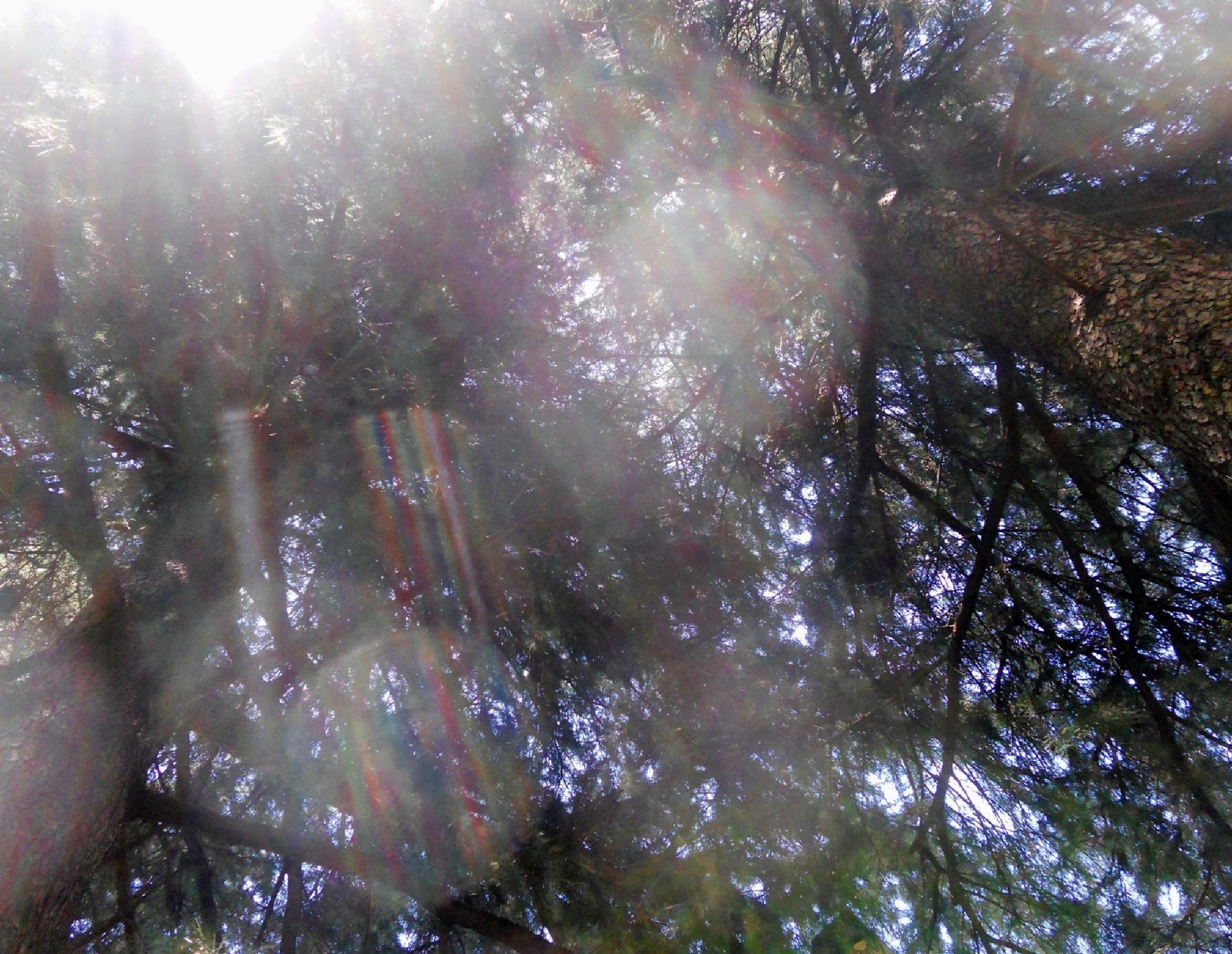 The sun through the branches by marilenavaccarini