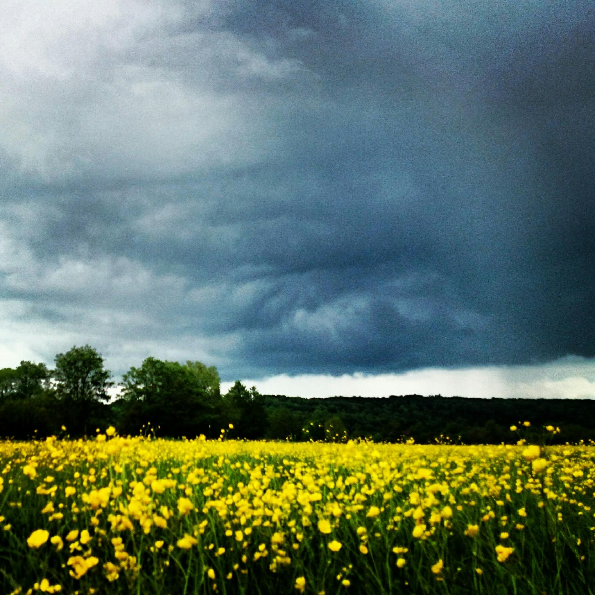 Photo in Landscape #nature #field #yellow #storm #sky