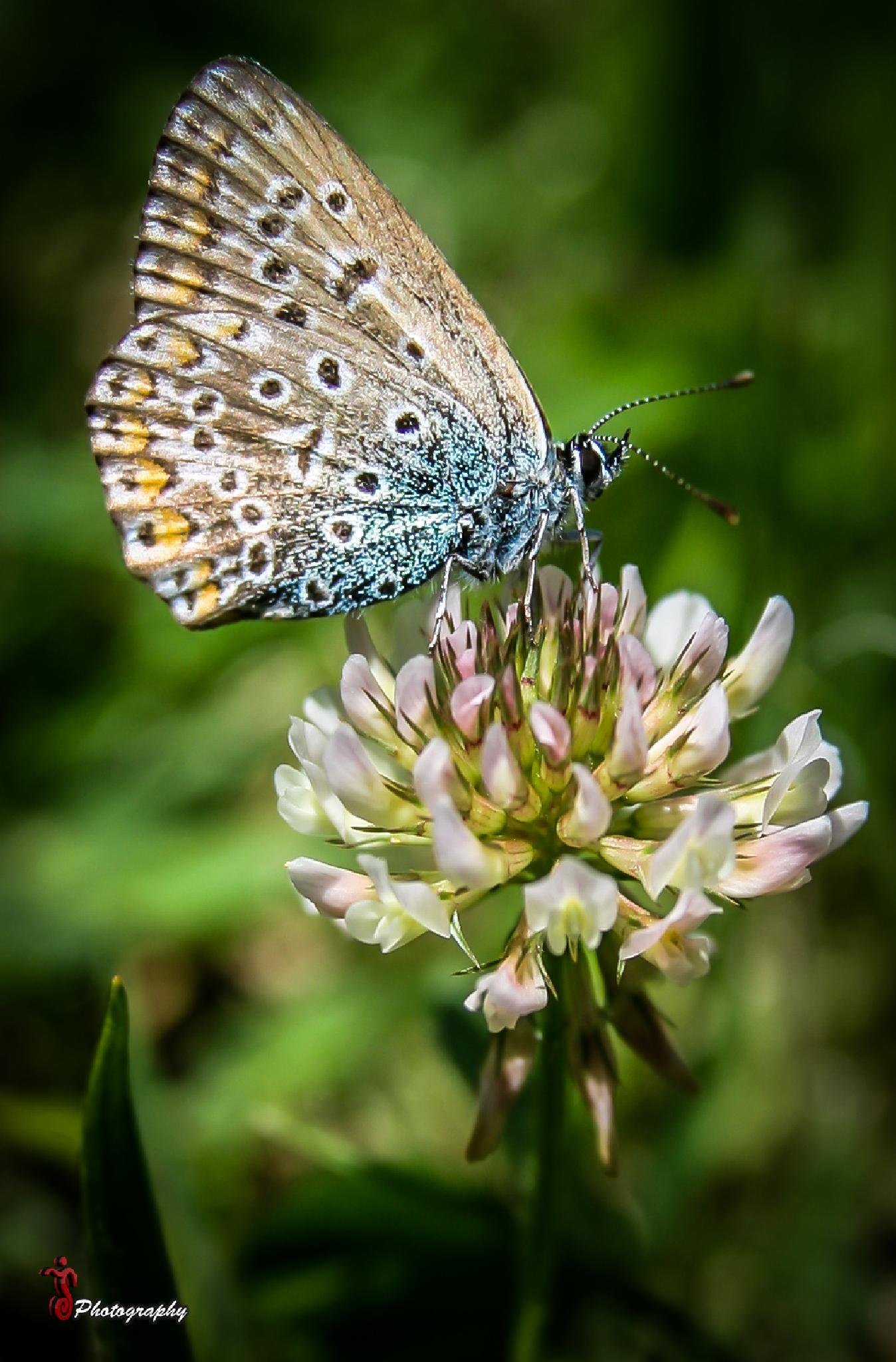 Photo in Macro #butterfly #insects #nature #macro