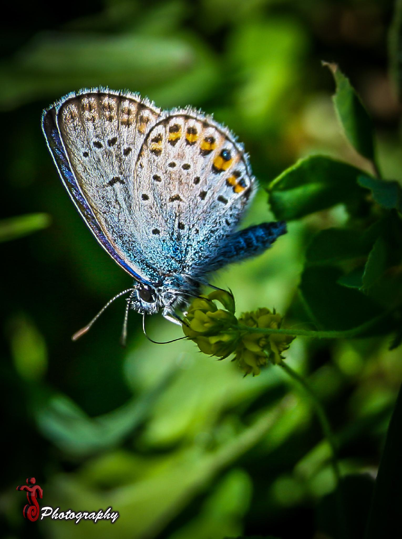Photo in Macro #insect #butterfly #nature #macro