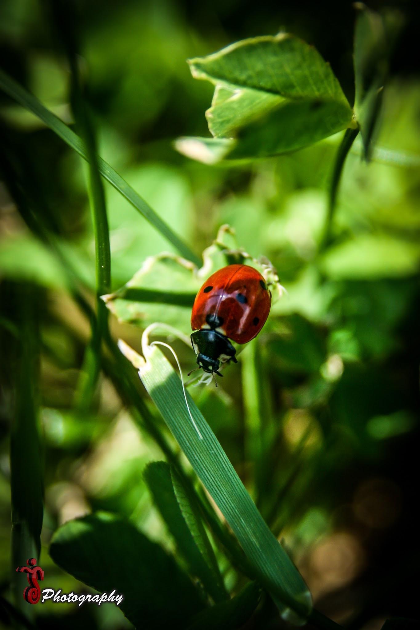 Photo in Macro #insect #nature #green #macro