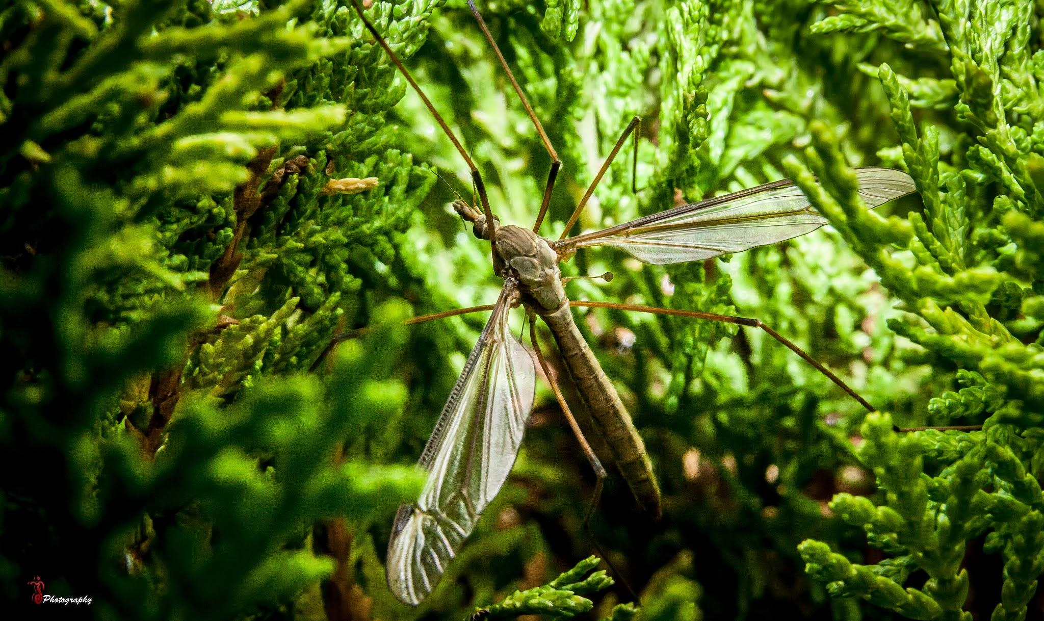 Photo in Macro #insect #natyre #grass #gree #outside #photography #natyre photography #macro