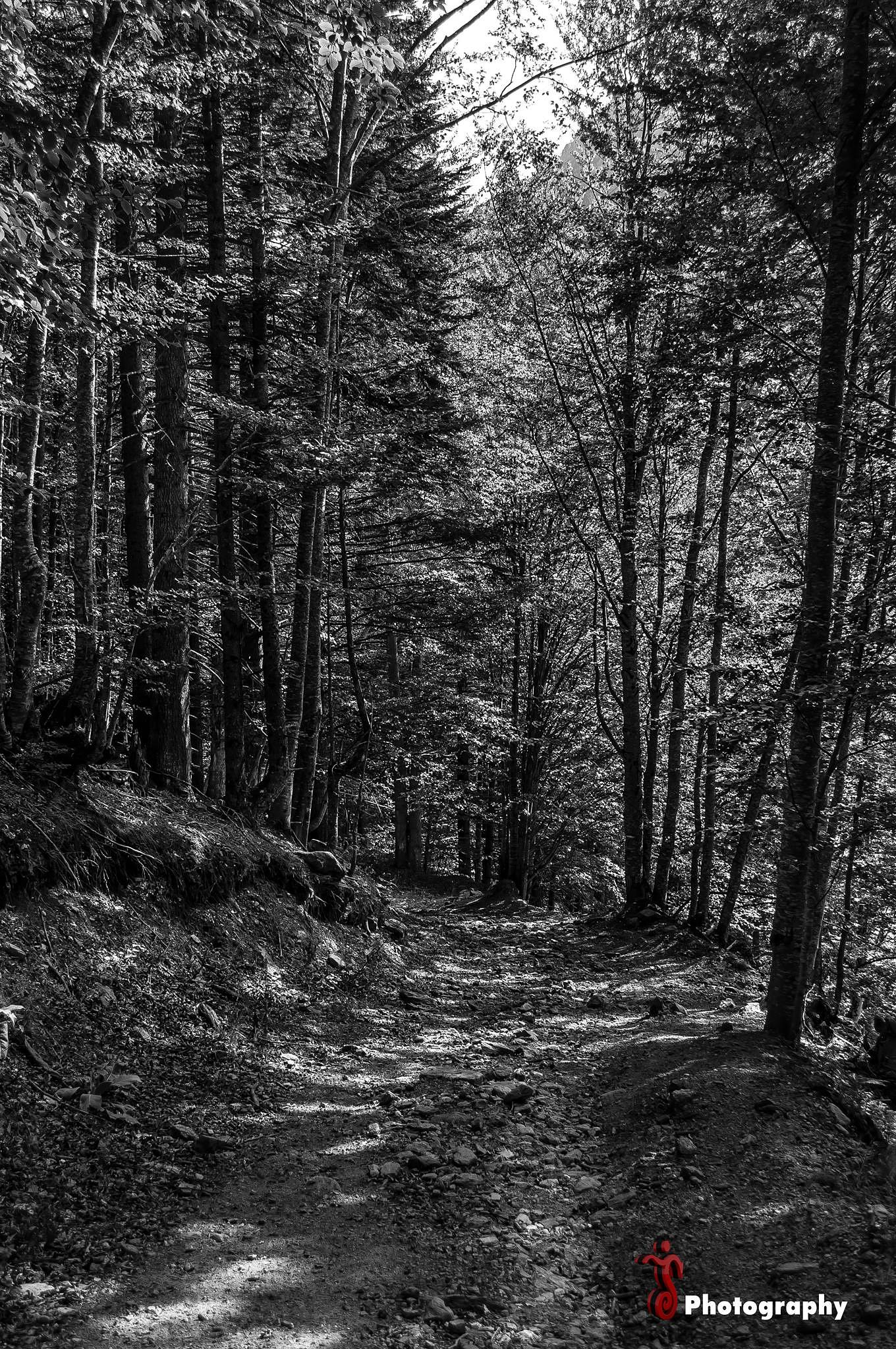 Photo in Black and White #wood #trees #tree #nature