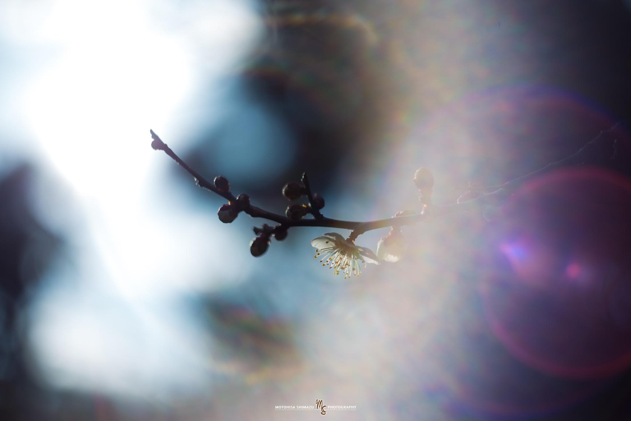 Untitled by Motohisa Shimazu