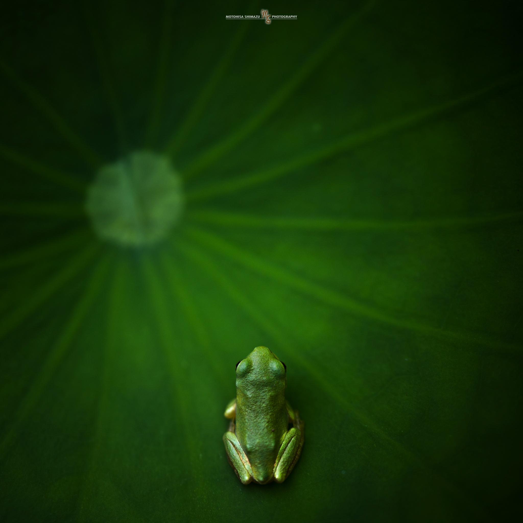 I was turned by magic into a frog. by Motohisa Shimazu