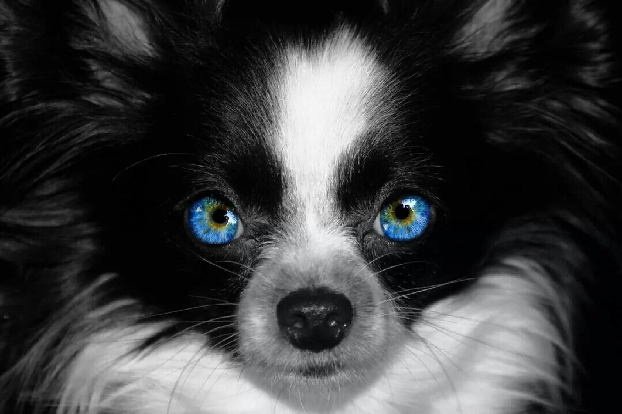 eyes ;) by RoydB