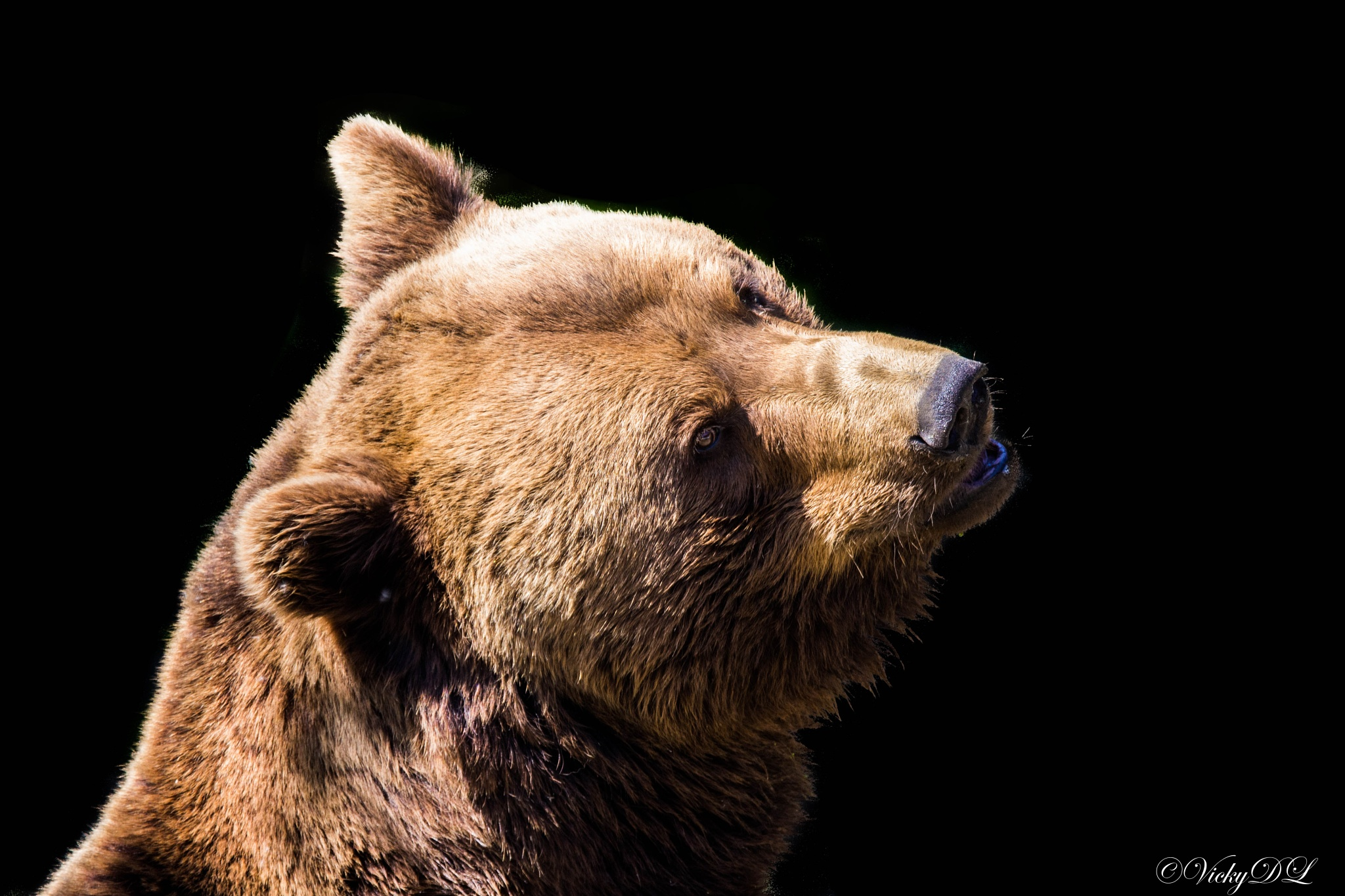 Bear by VickyDeLaet