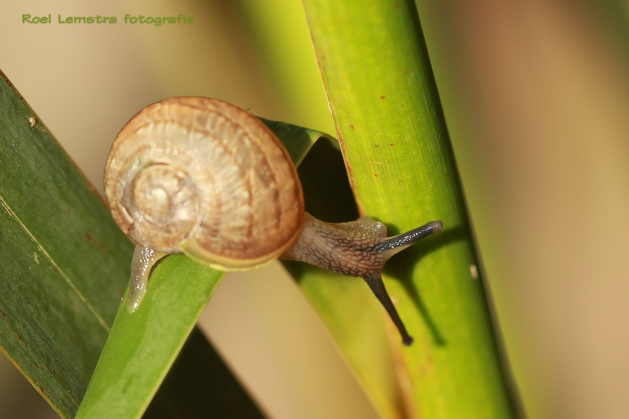 a snail finding his way by roel.lemstra