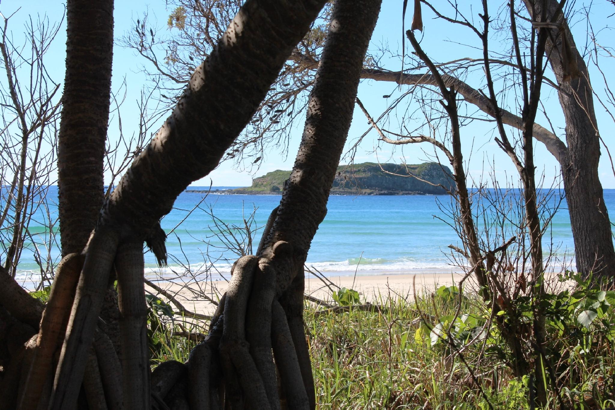 Island Paradise by RickyJ