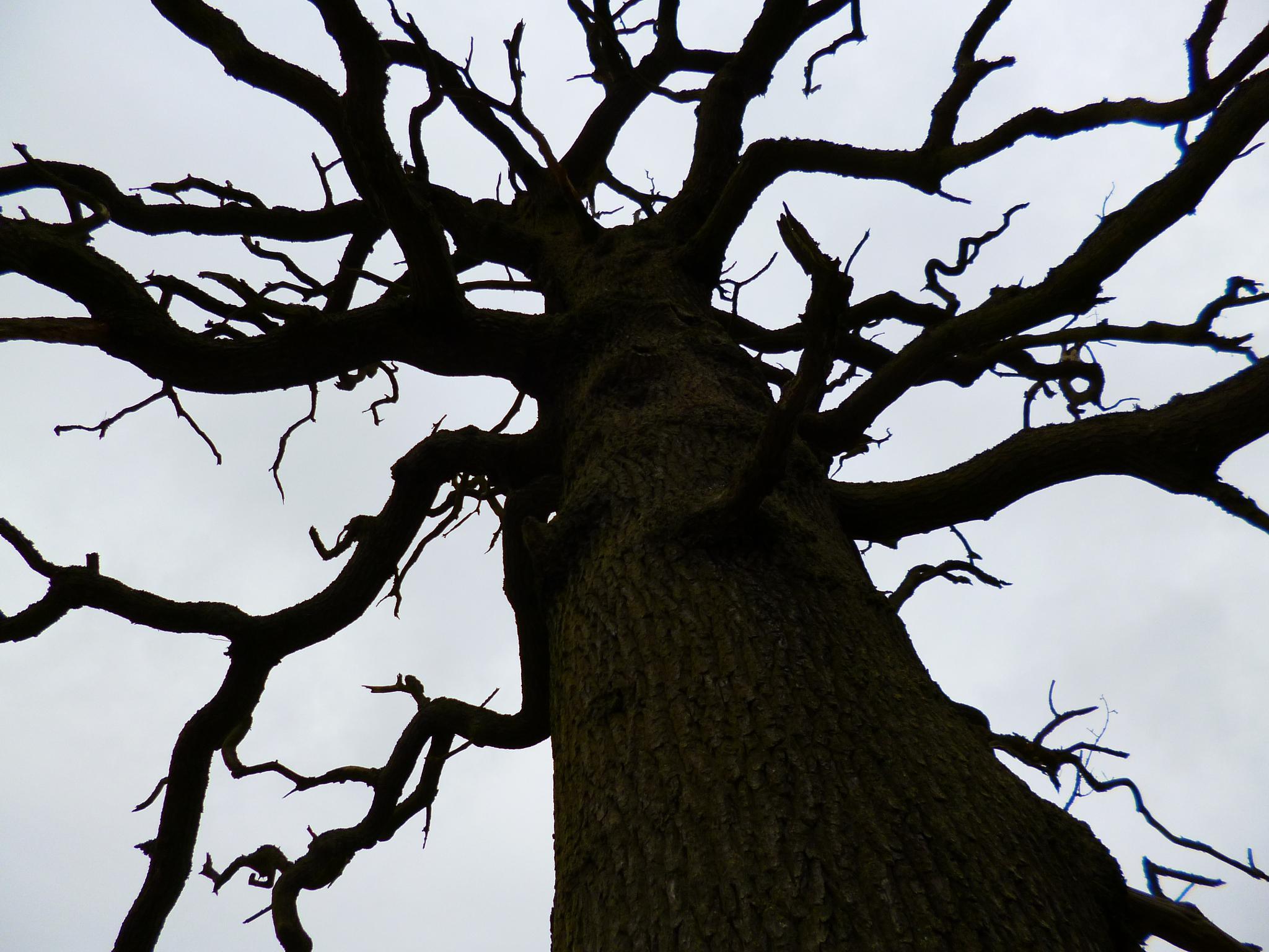 Ye olde oak by arnejan