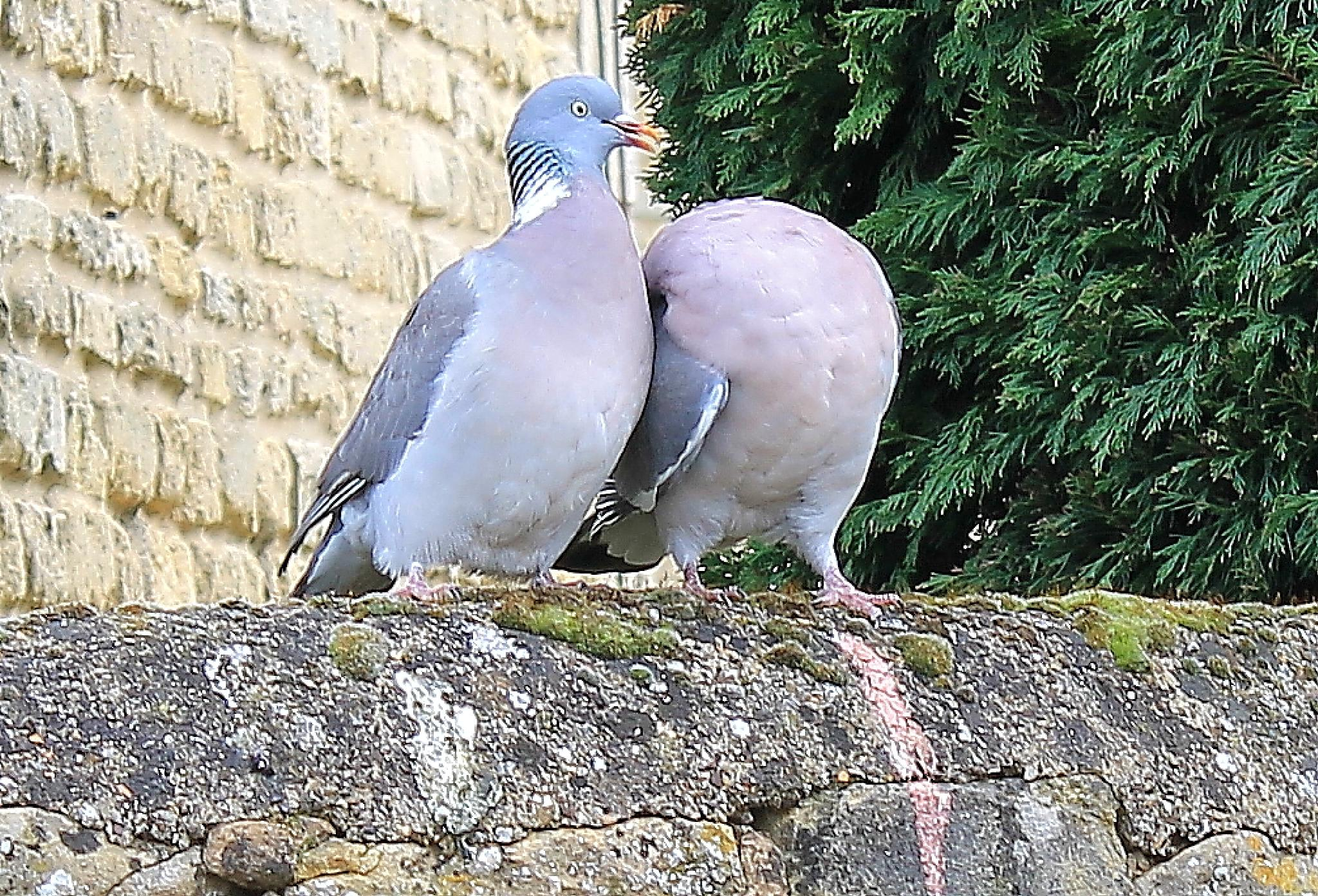 The headless Dove by arnejan