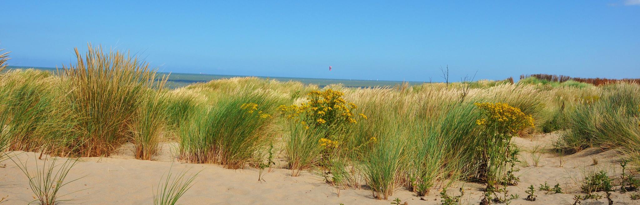 De Haan aan zee , duinenpartij by Marc Verlee