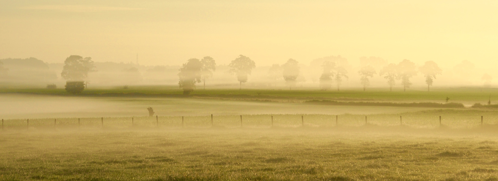 white horse in the morning  by Marc Verlee