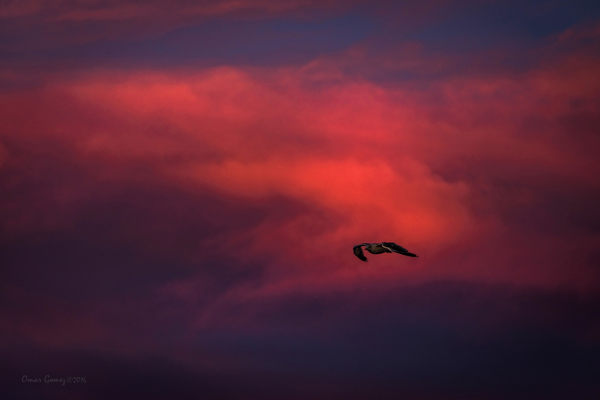 Flying On A Red Sky by Omar Gomez
