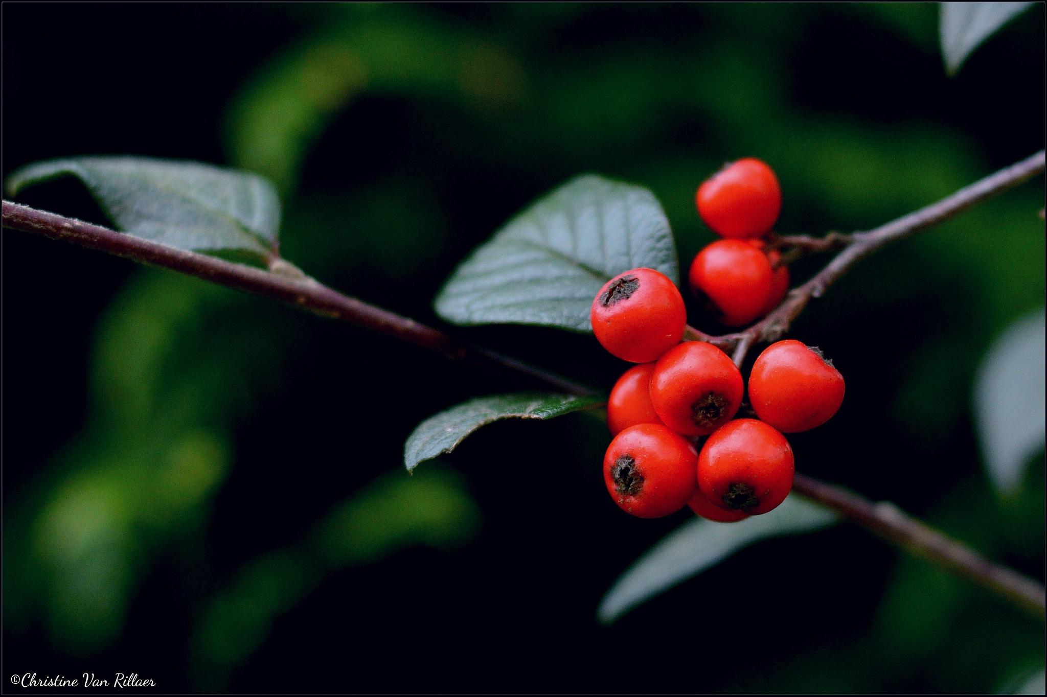 Autumn fruit by Chris