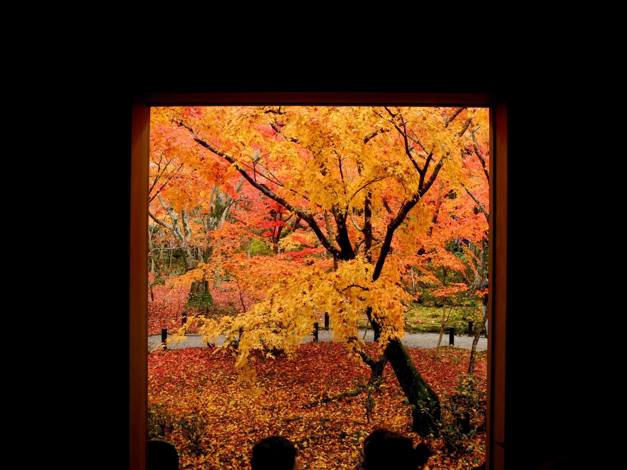Special window③ by kunihiko.yasuda.5
