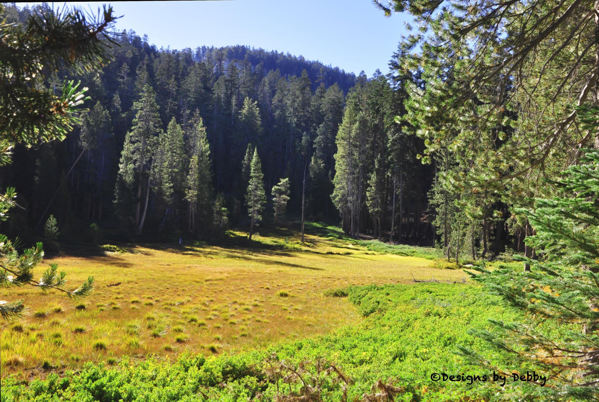 the Meadow by Debby Pueschel