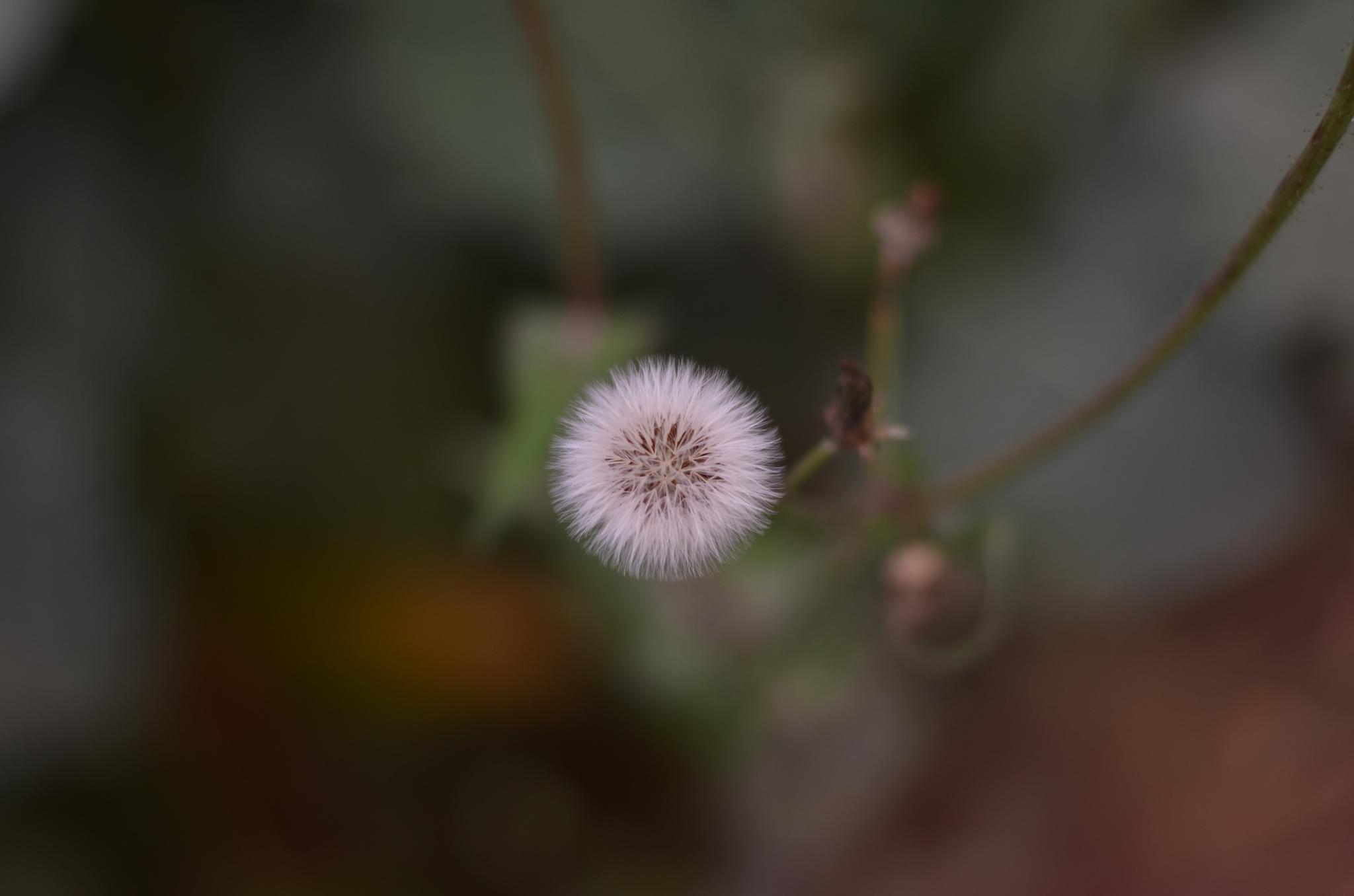 macro by wilson.maweu