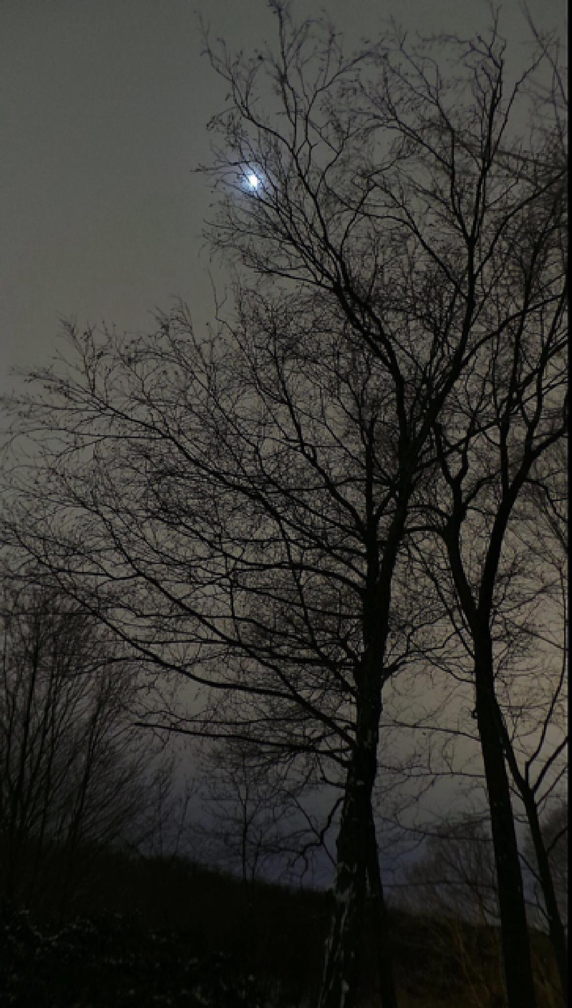 goodnight  by claudia.watkins.146