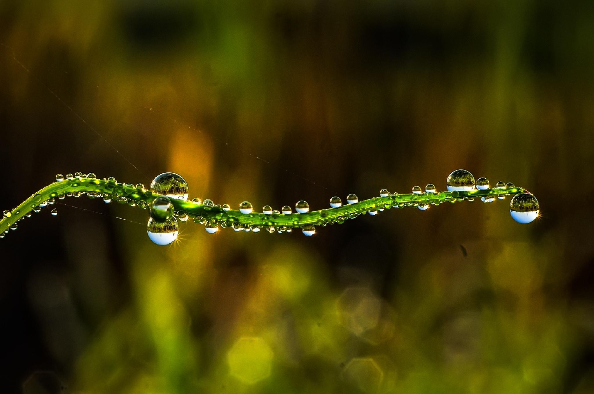 to much dews.... by KawanGS