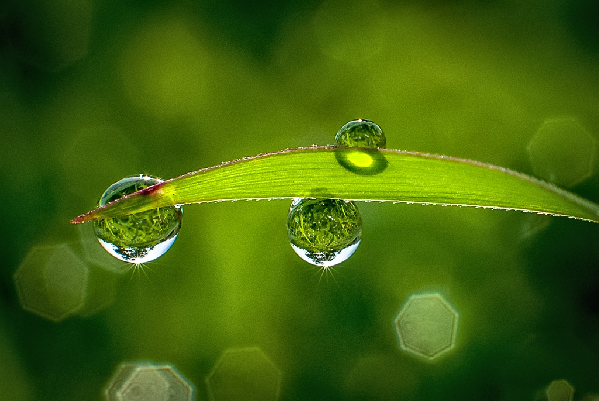 morning dews by KawanGS
