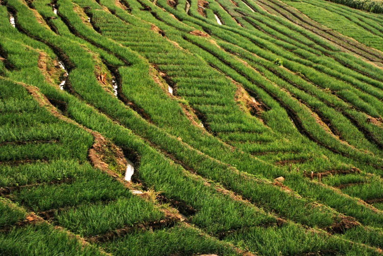 fields by KawanGS