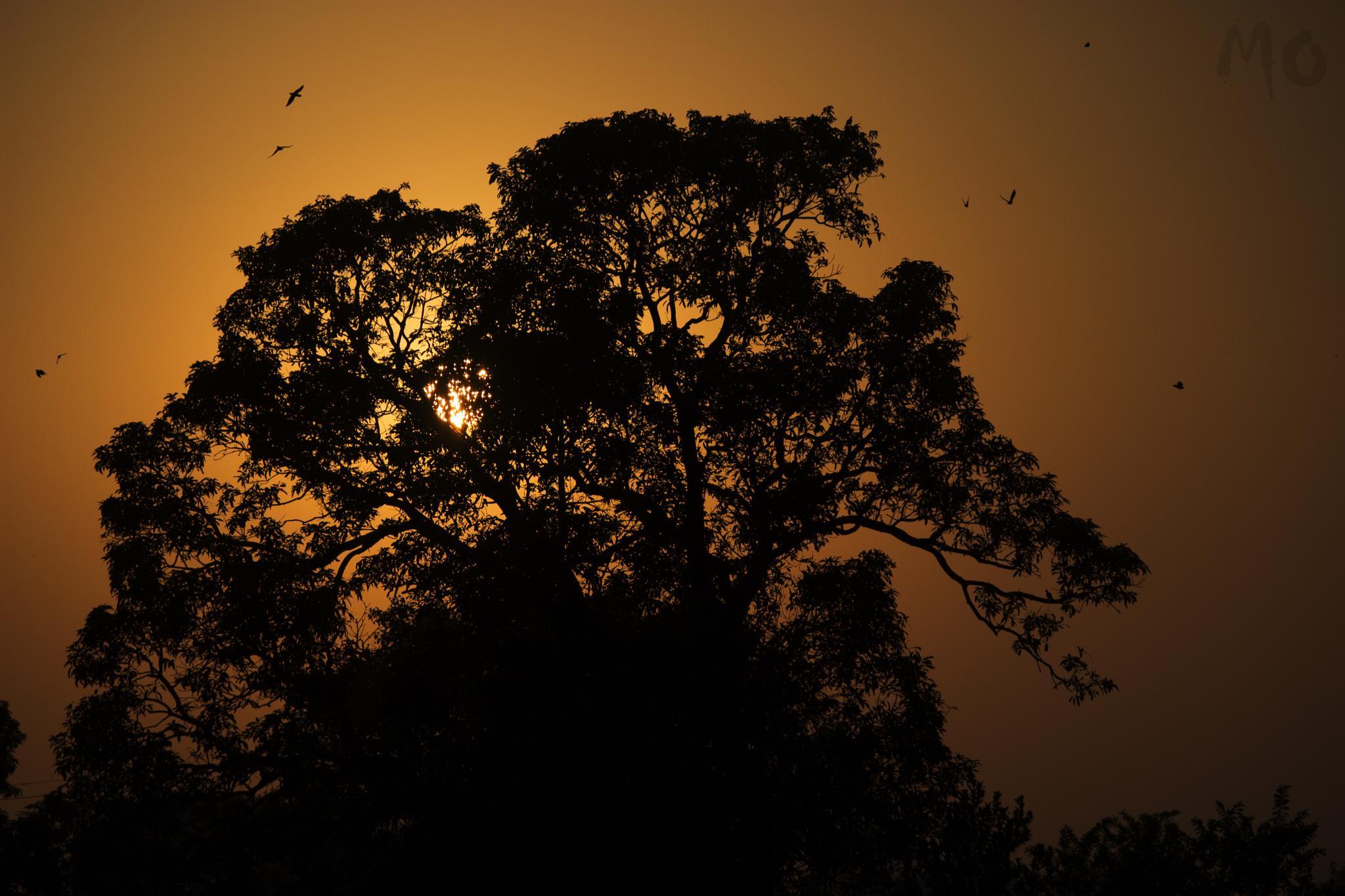 just another evening at varanasi... by Meet Oza