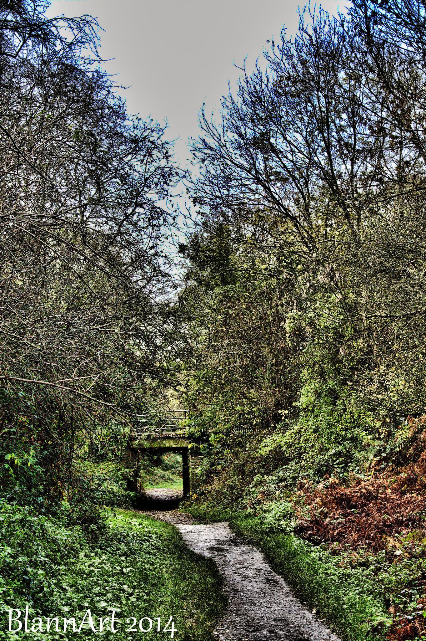 A well trodden path by Phil Blann