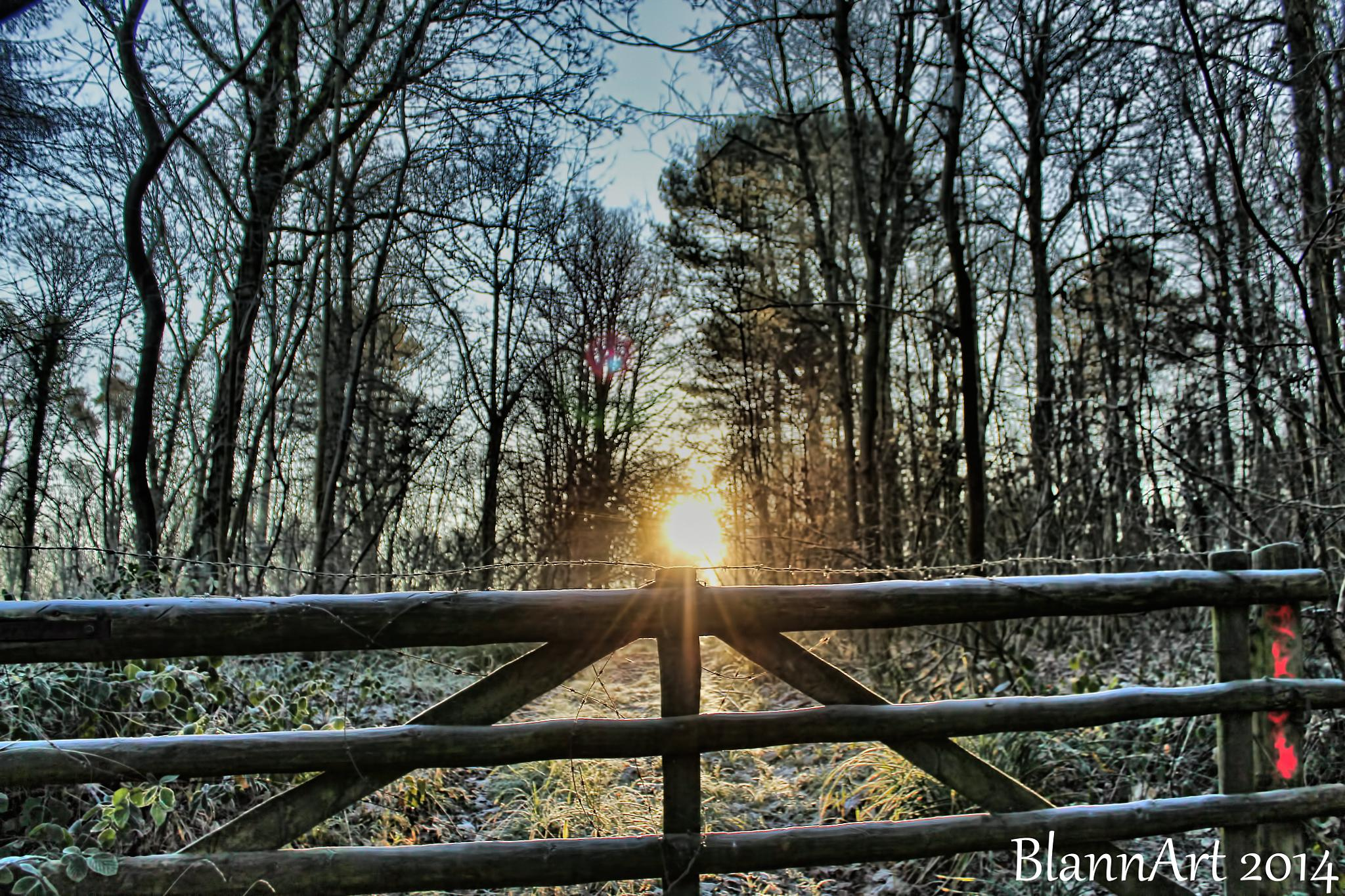 The Rising Sun on a December Morning by Phil Blann