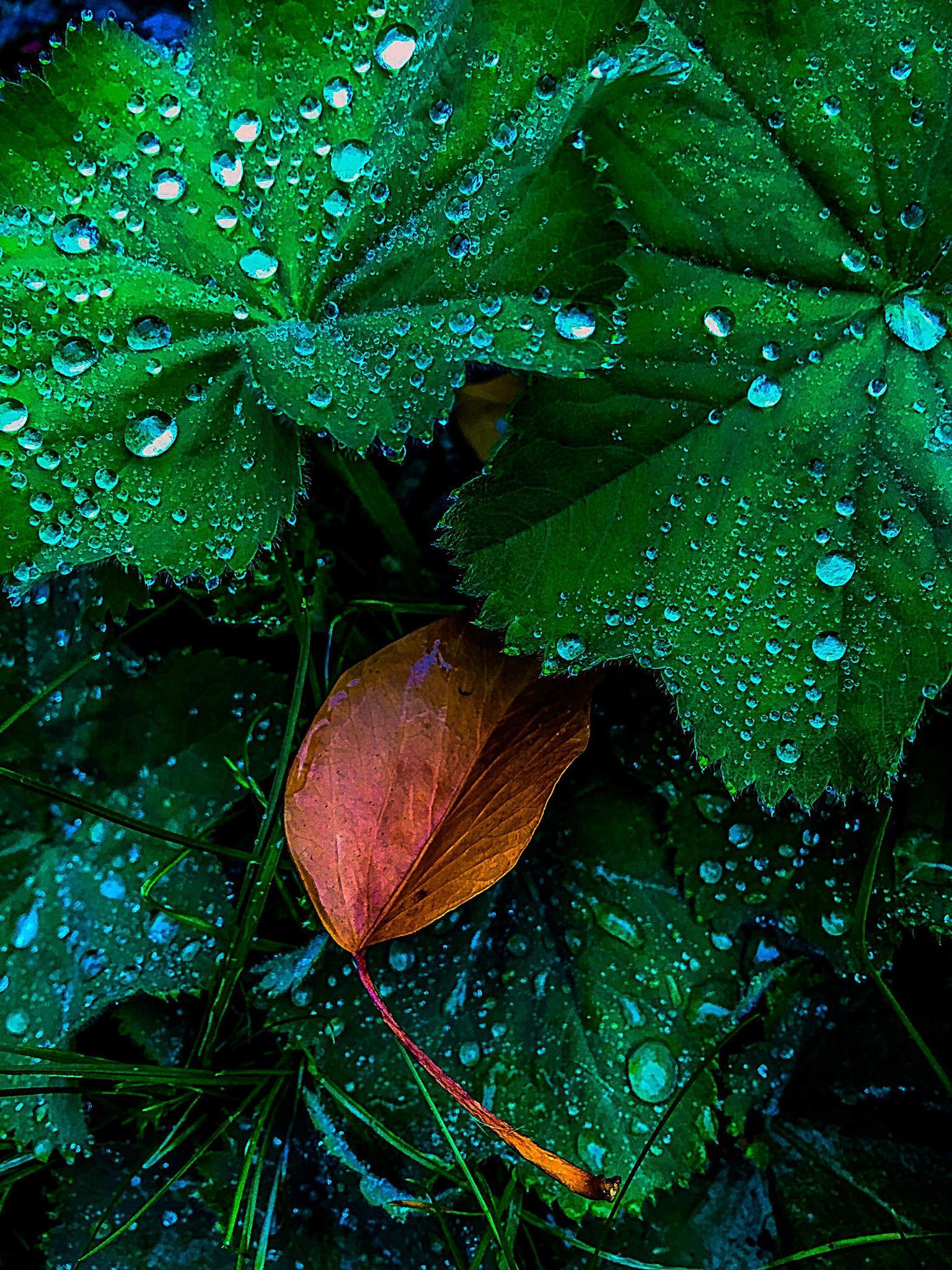 Little brown leaf by RONNIE ERICSON