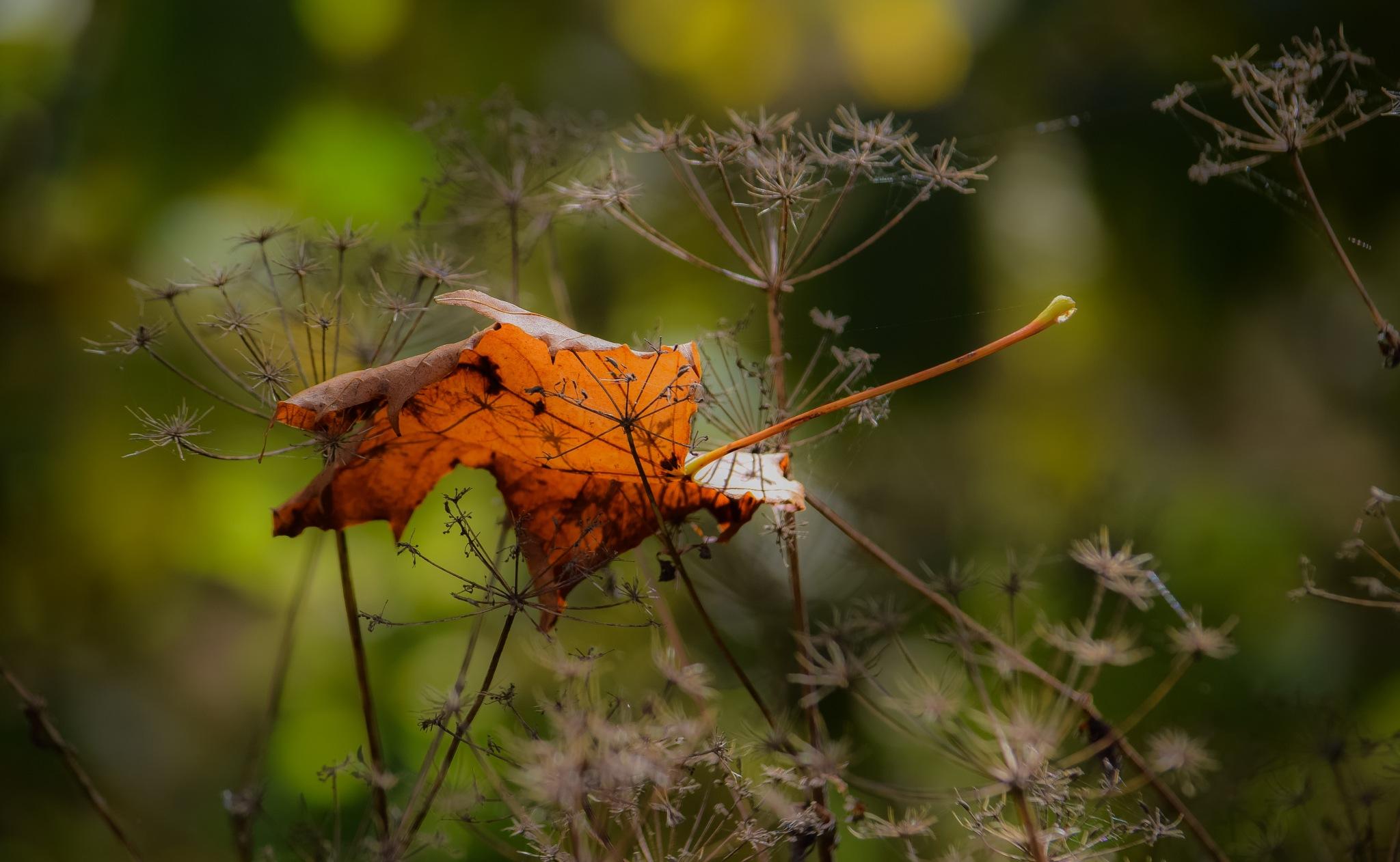 The autumn is near by RONNIE ERICSON