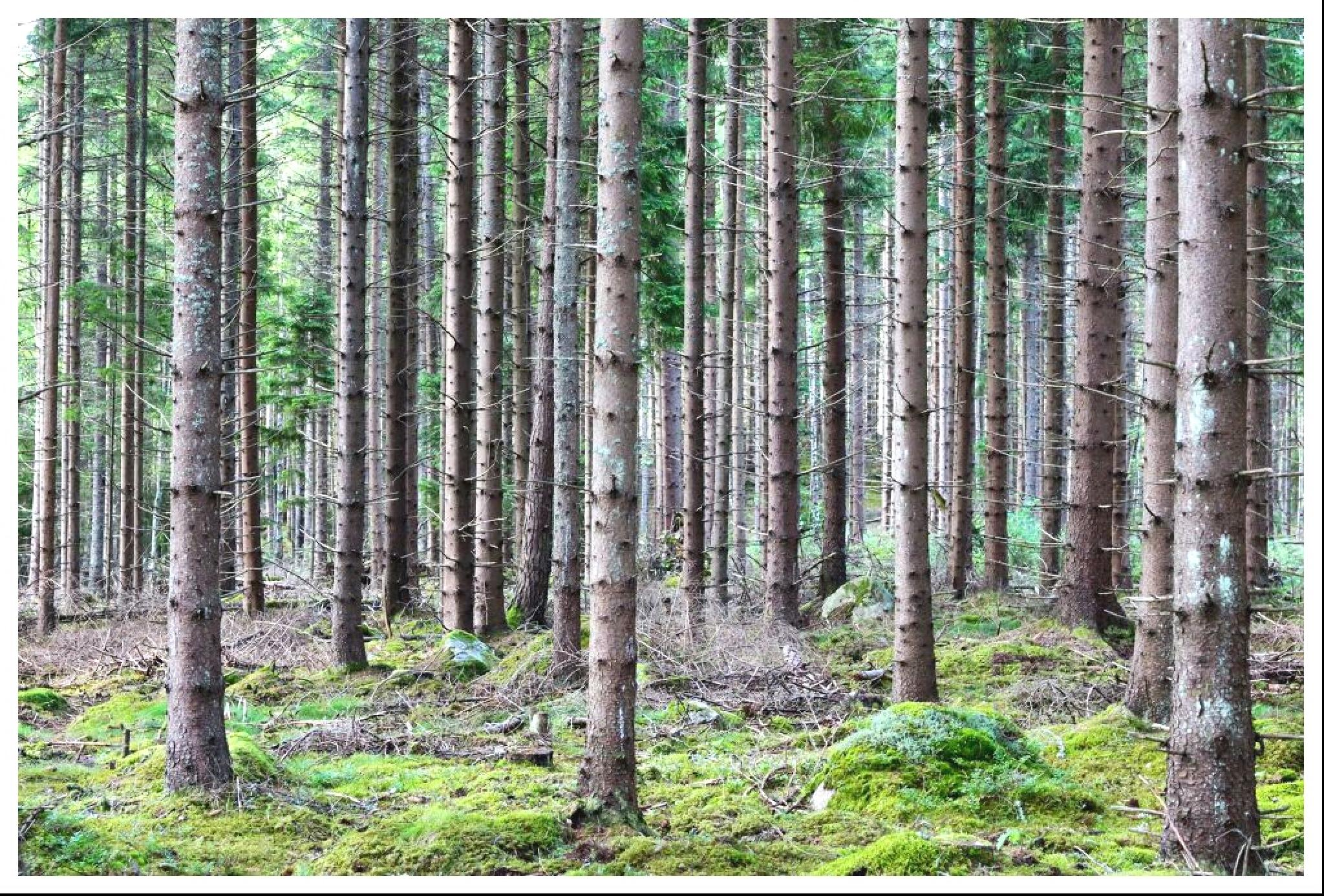 Among the trees by kickilina68